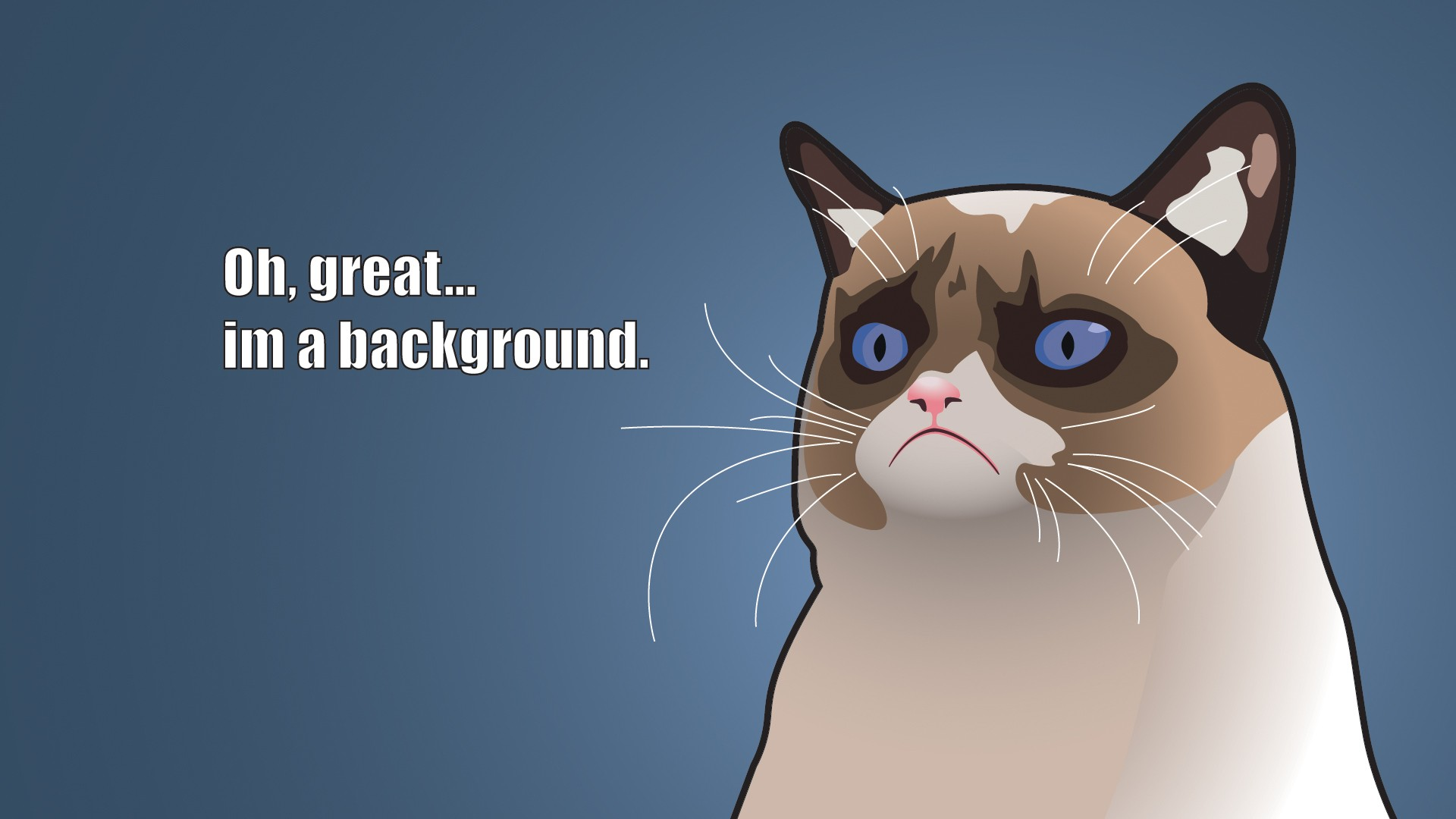 Grumpy Cat Wallpaper Download Free Stunning Hd Backgrounds For