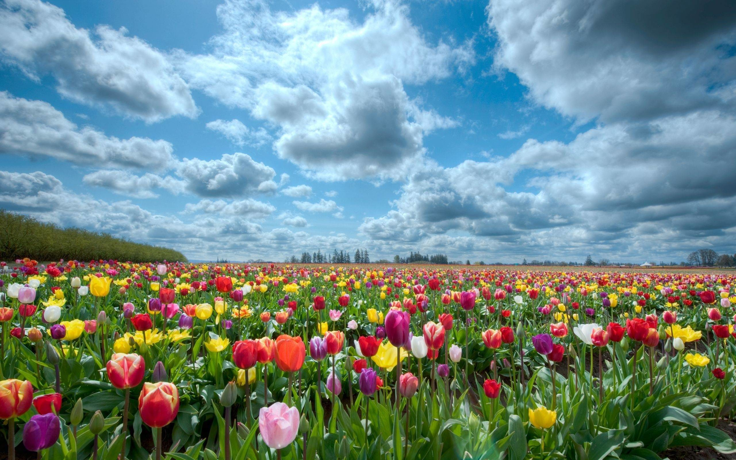 Flower Garden Background 1