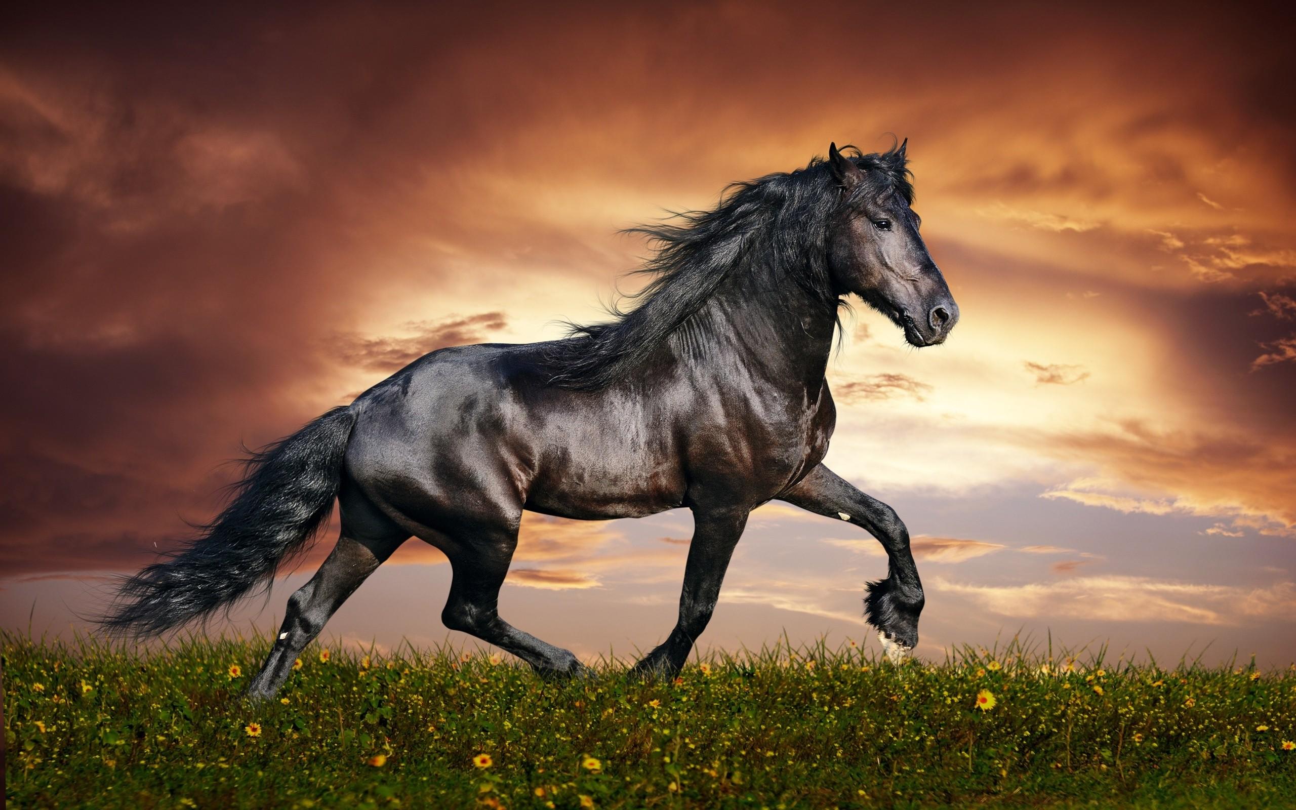 Black Horse Wallpaper Wallpapertag