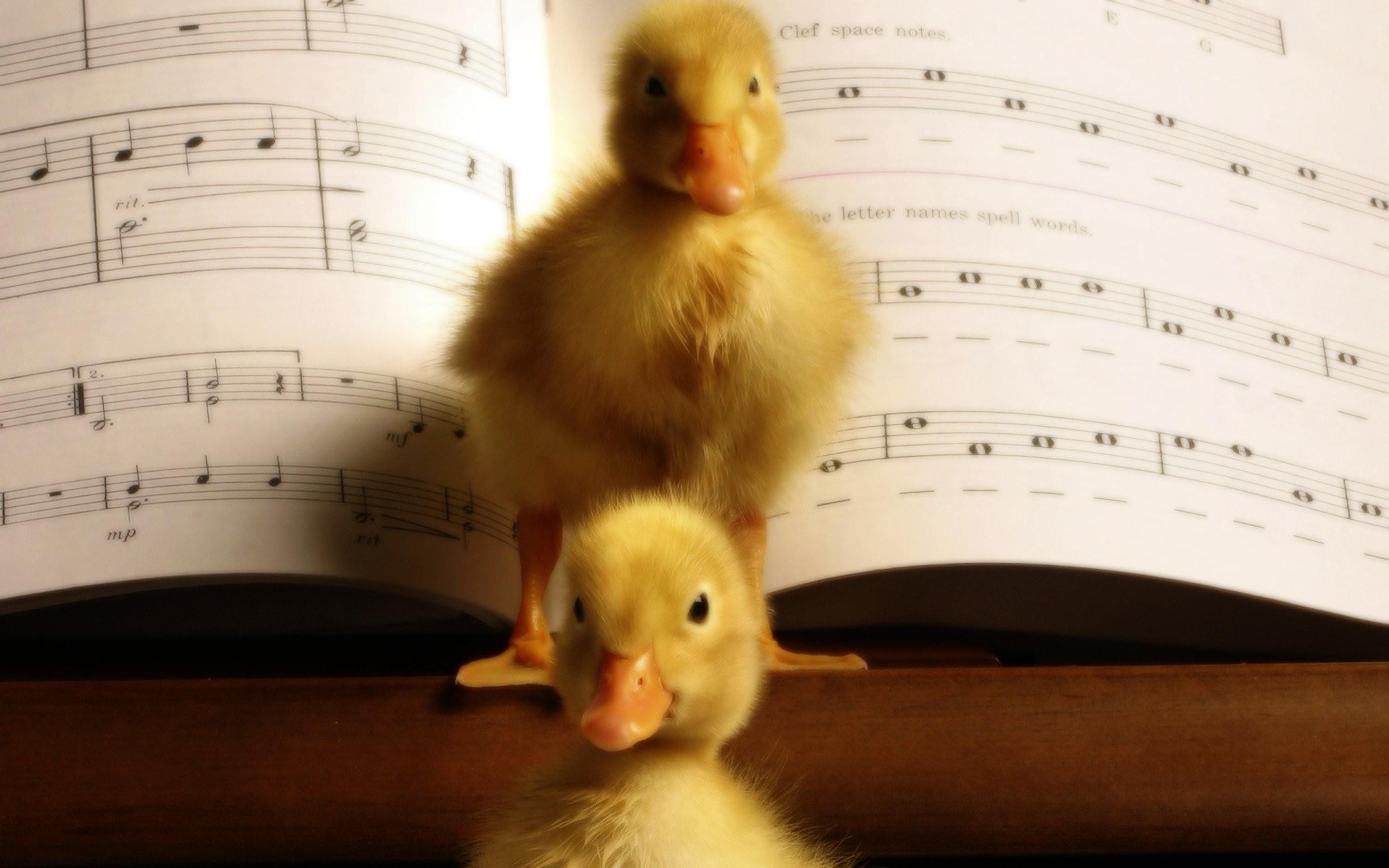 Baby Duck Wallpaper 183 ① Wallpapertag