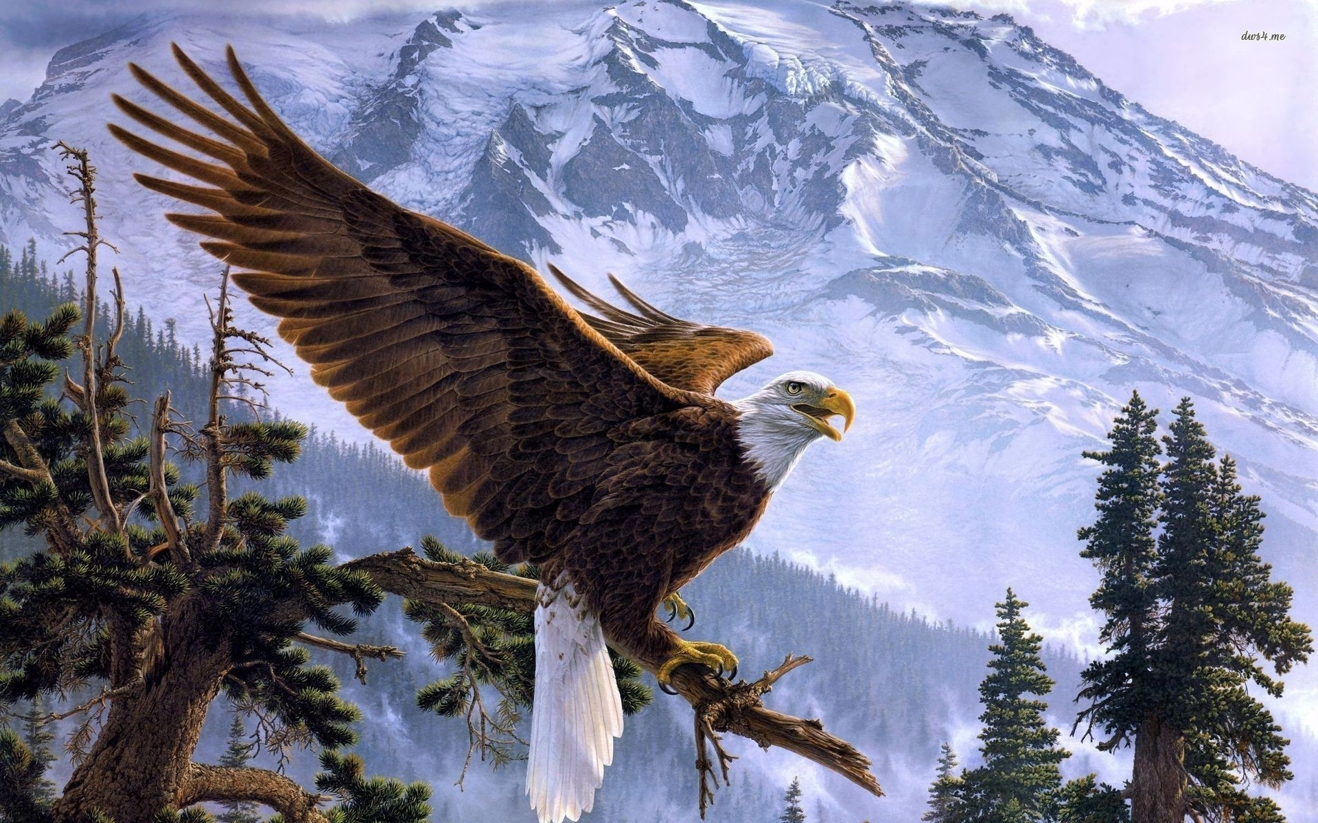 american bald eagle wallpaper ·①