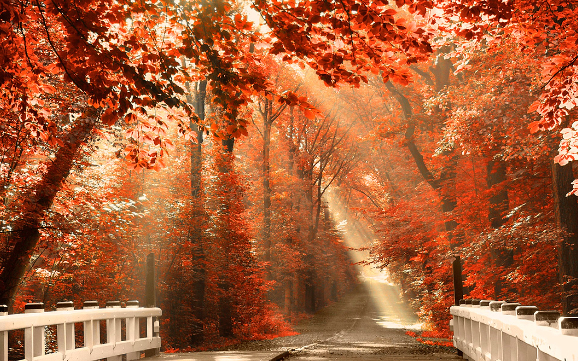 42 Autumn Backgrounds Download Free Stunning Hd: Autumn Desktop Wallpaper ·① Download Free Stunning Full HD