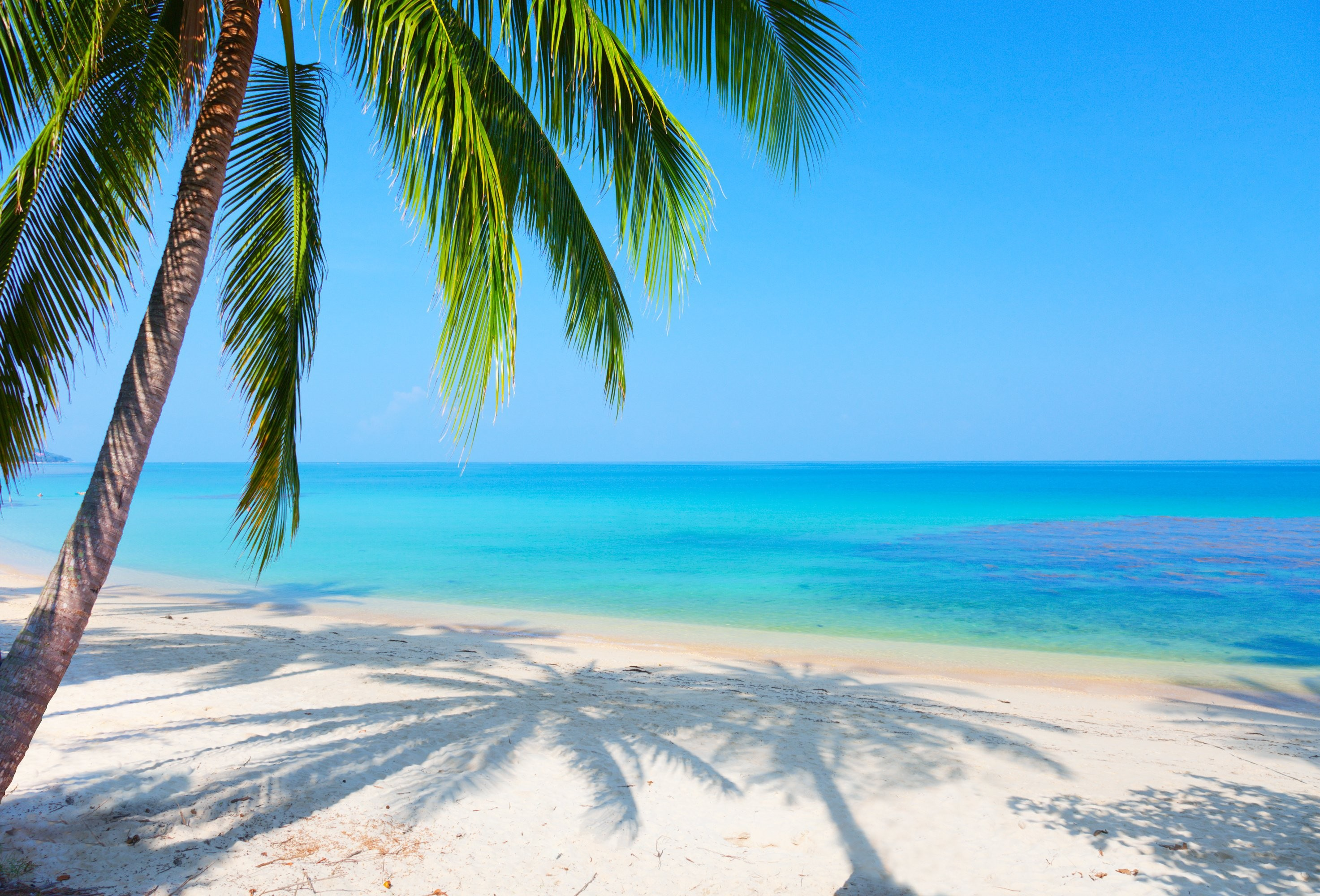 Palm Trees On The Beach: Palm Tree Background ·① Download Free HD Backgrounds For