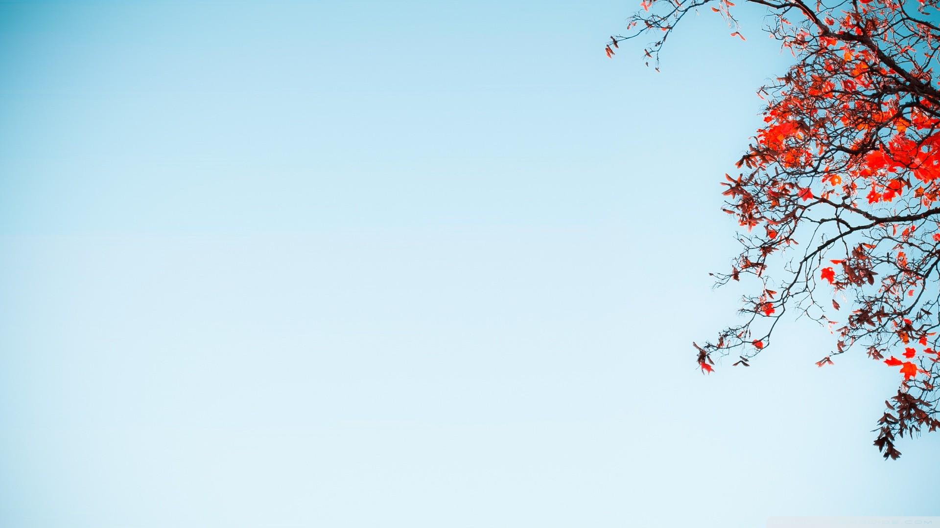 Sky Wallpapers: Blue Sky Wallpaper ·① WallpaperTag