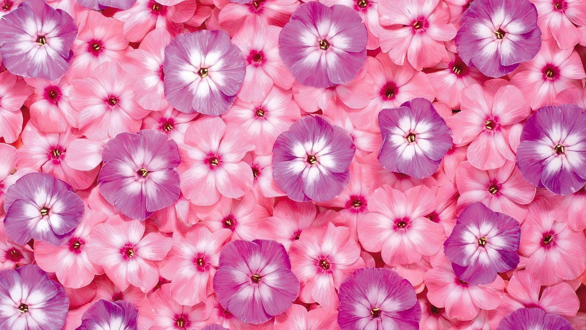 Pink Flower Wallpaper Background Wallpapertag