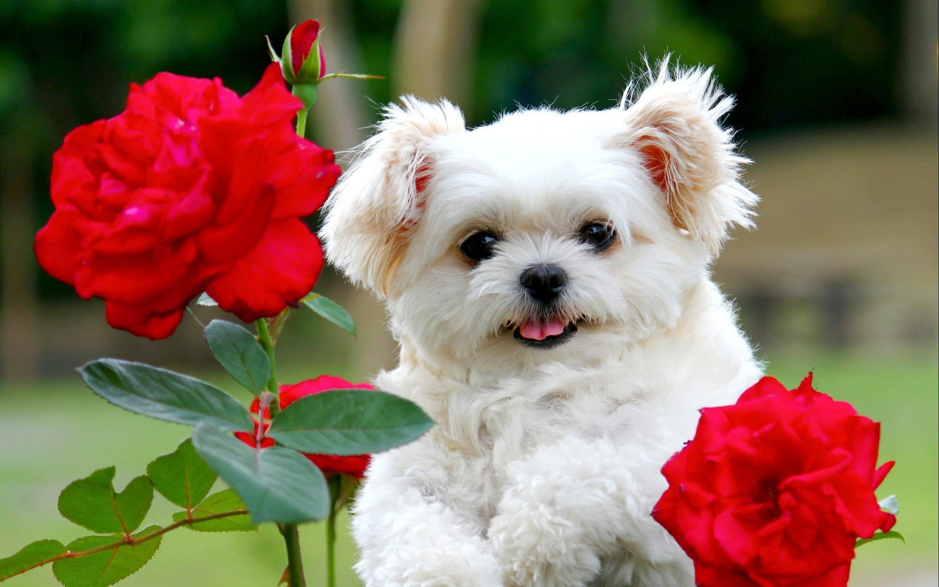 Cute Dogs And Puppies Wallpaper 1