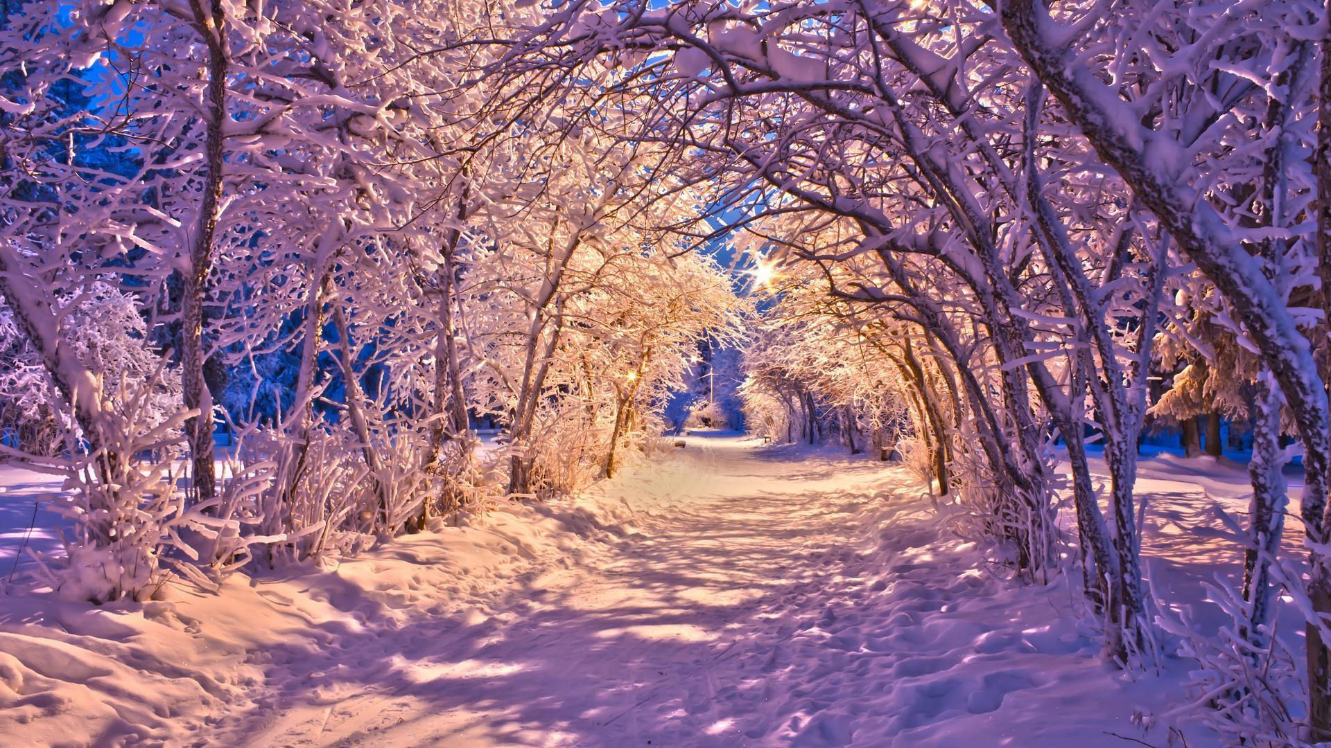 Парк зима ели  № 2388848 без смс