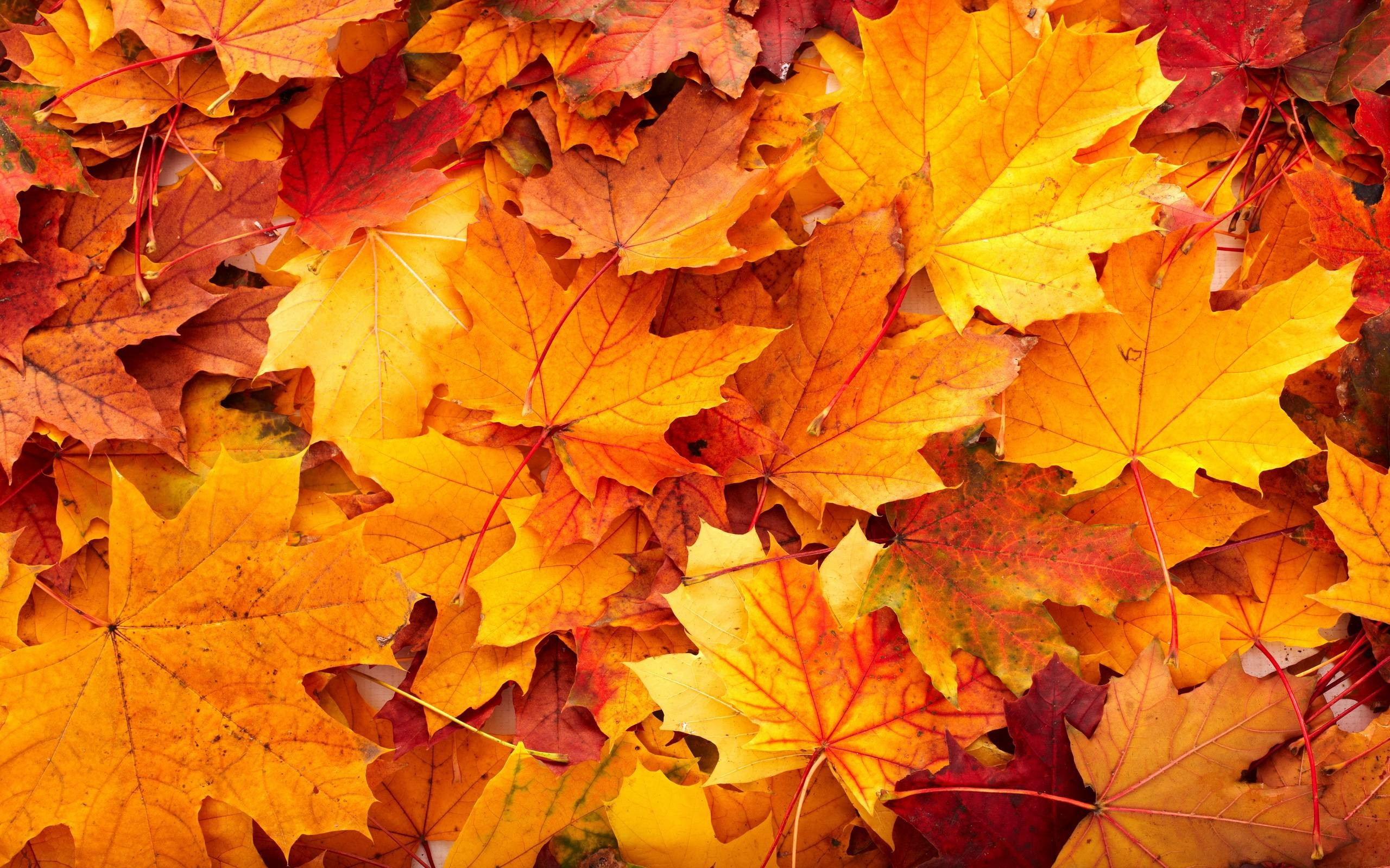 It's just a picture of Clever Fall Leaf Background