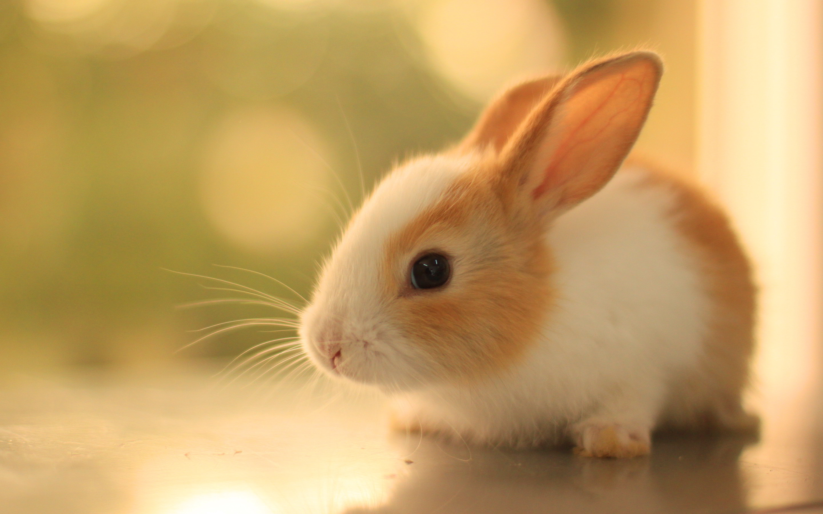 Cute Bunny Wallpapers Wallpapertag