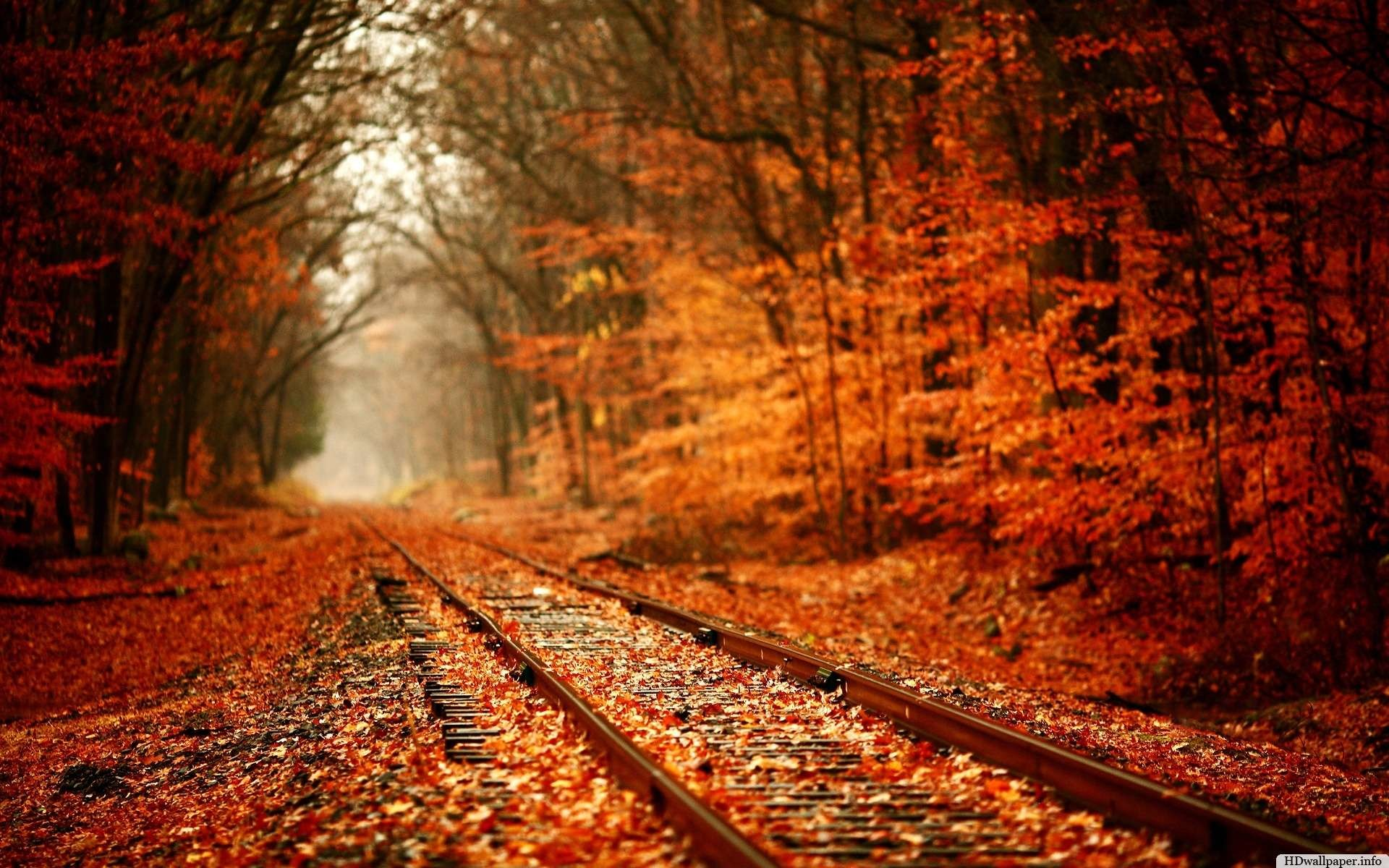 1920x1200 autumn desktop wallpaper widescreen