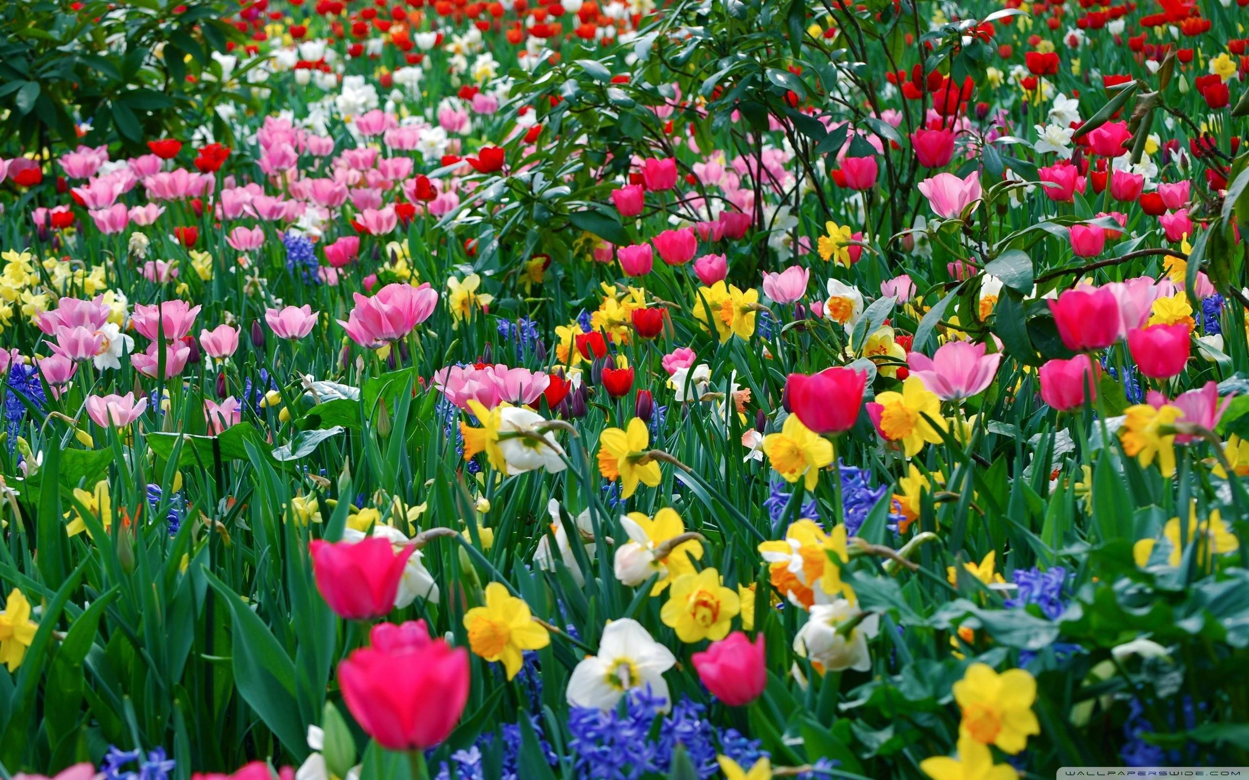 Spring Flowers Wallpaper Download Free Beautiful High Resolution