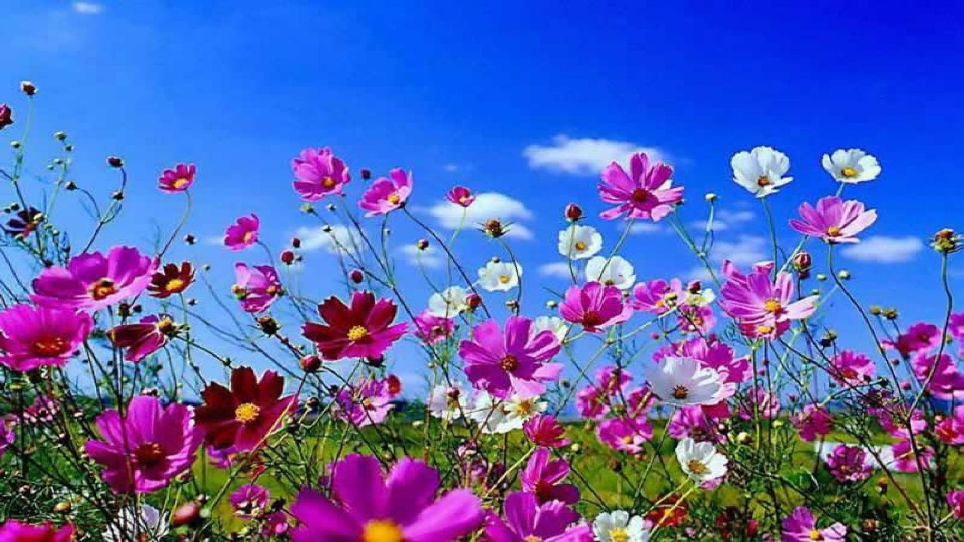 Spring Flowers Background Desktop