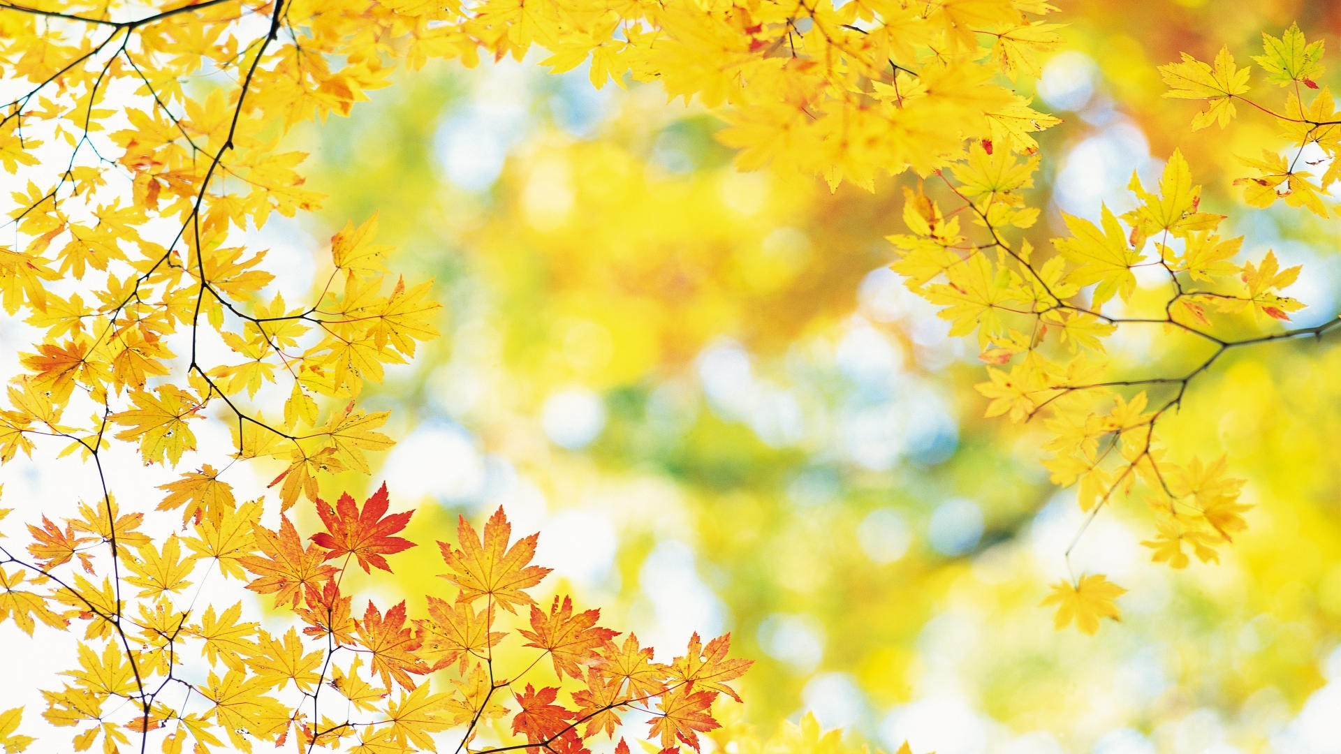 fall wallpaper for iphone 5c