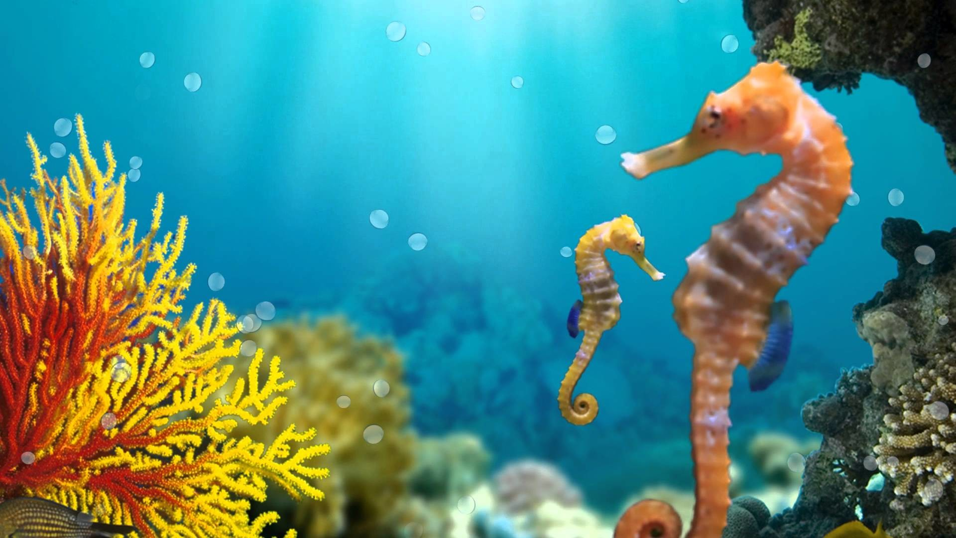 Seahorse Wallpaper ·①