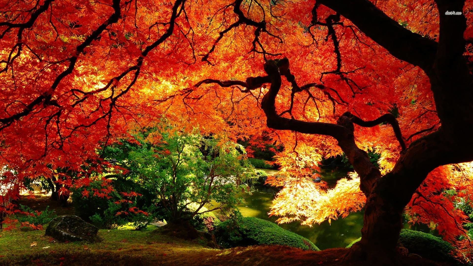 1920x1080 Images For U003e Fall Landscape Wallpaper