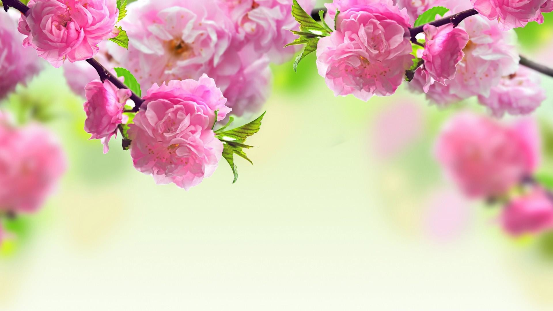 Flower Wallpapers For Desktop Wallpapertag