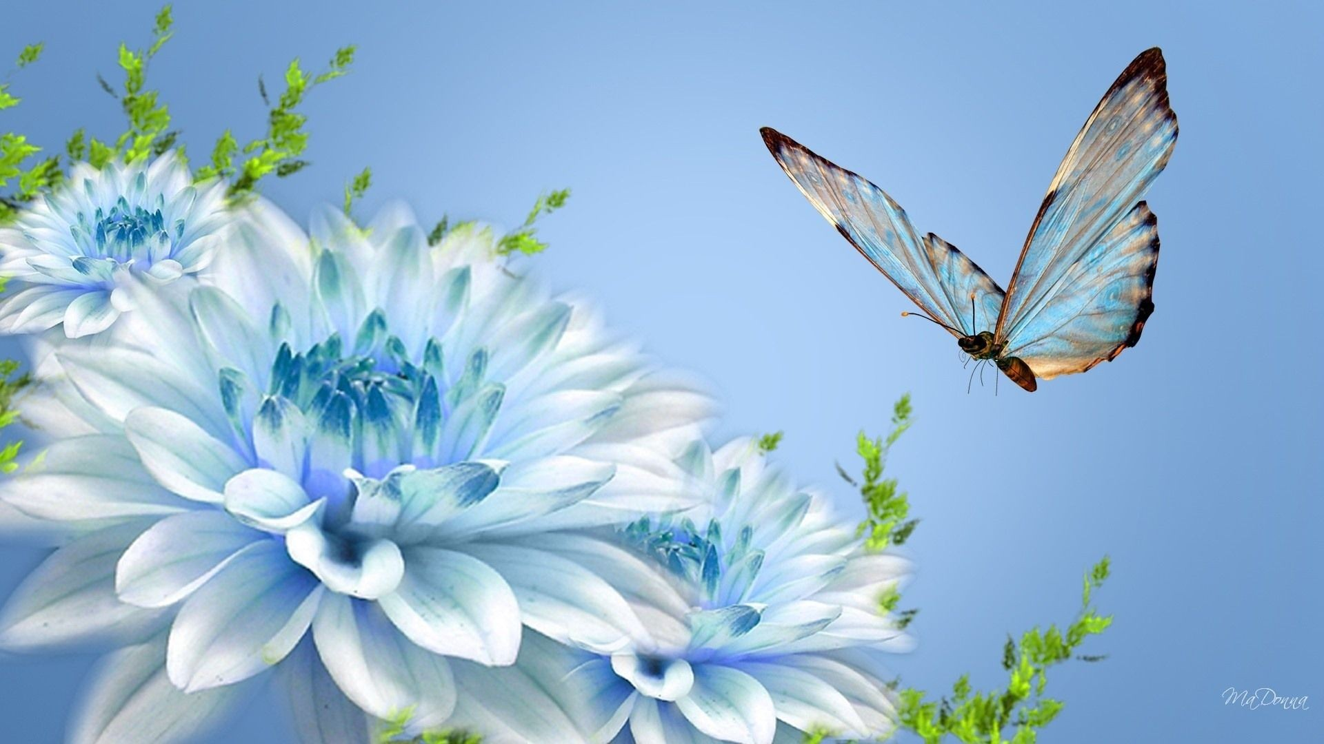 Butterfly wallpaper ·① Download free beautiful full HD wallpapers for desktop, mobile, laptop in