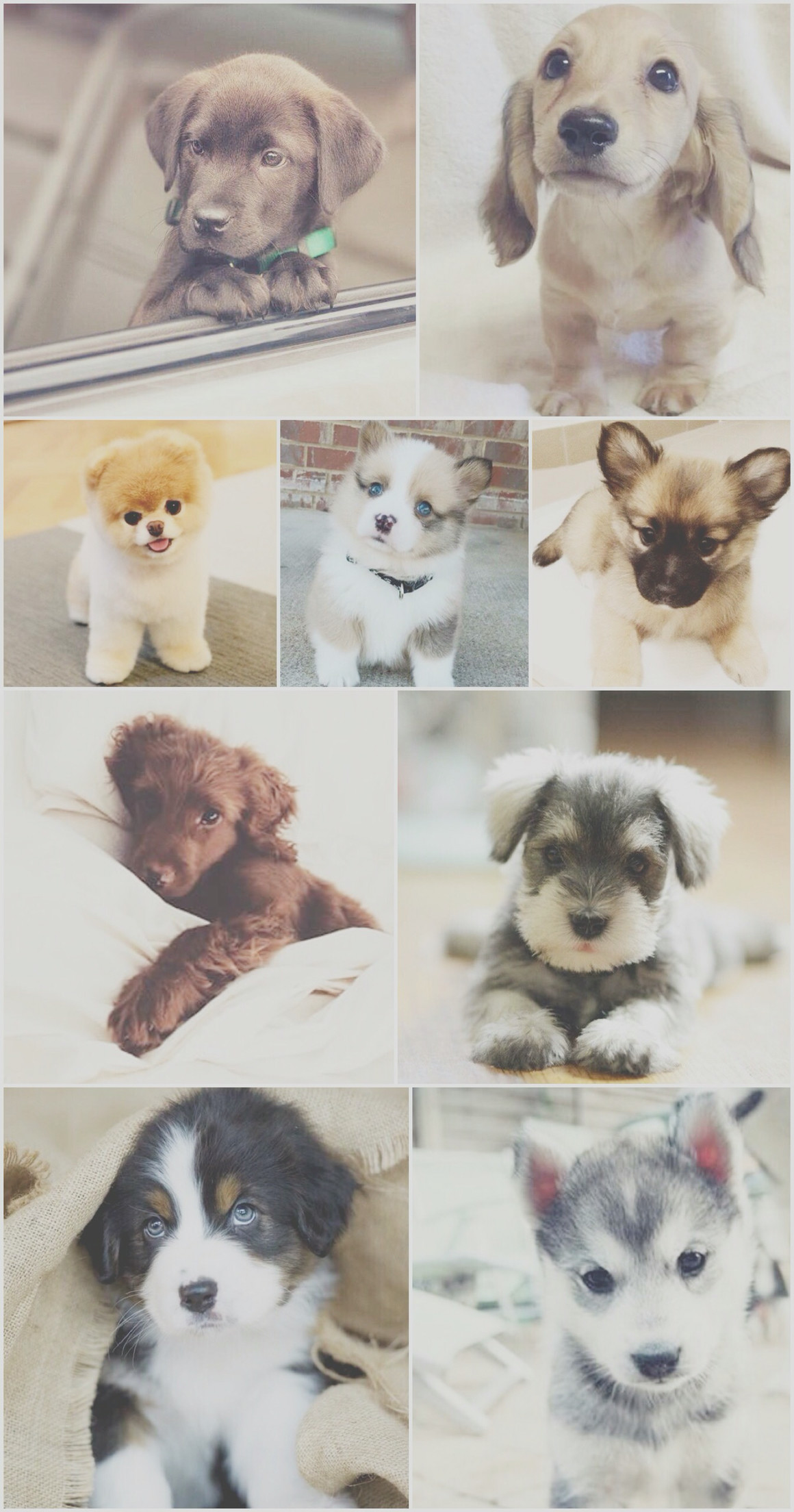 Cute Dogs And Puppies Wallpaper Wallpapertag
