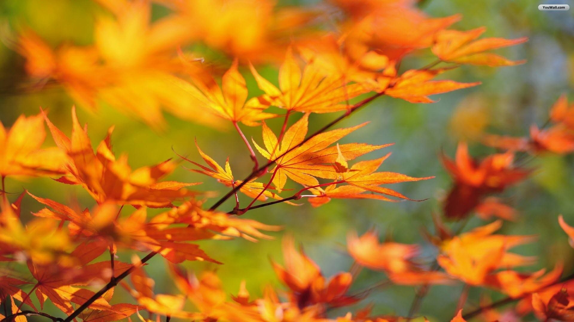 Fall Leaves Desktop Background ·① Download Free Stunning