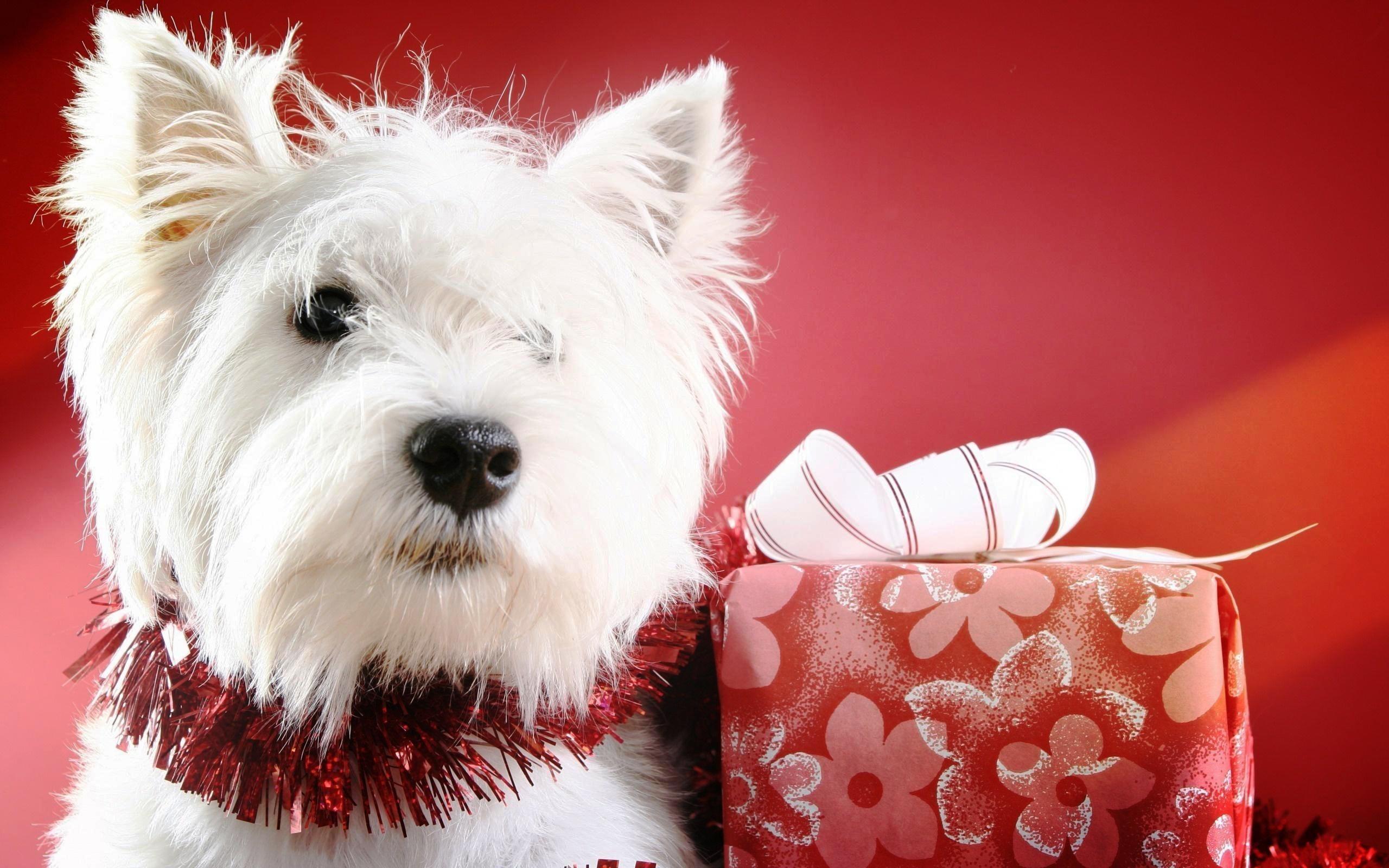 Puppy Christmas Wallpaper ·① WallpaperTag
