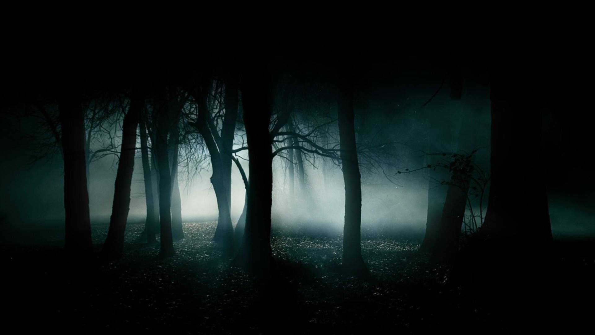 1920x1080 Dark Forest Wallpaper