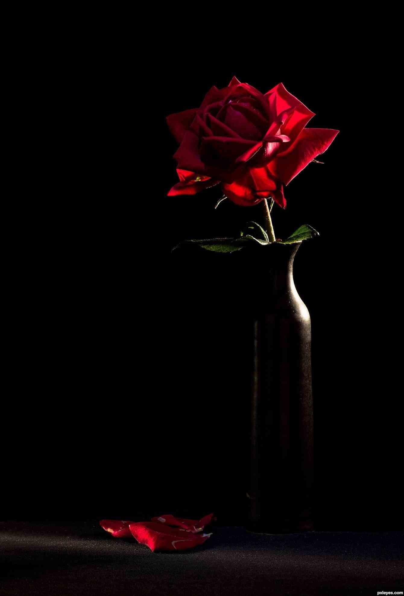 Red roses on black background wallpapertag - Black red rose wallpaper ...
