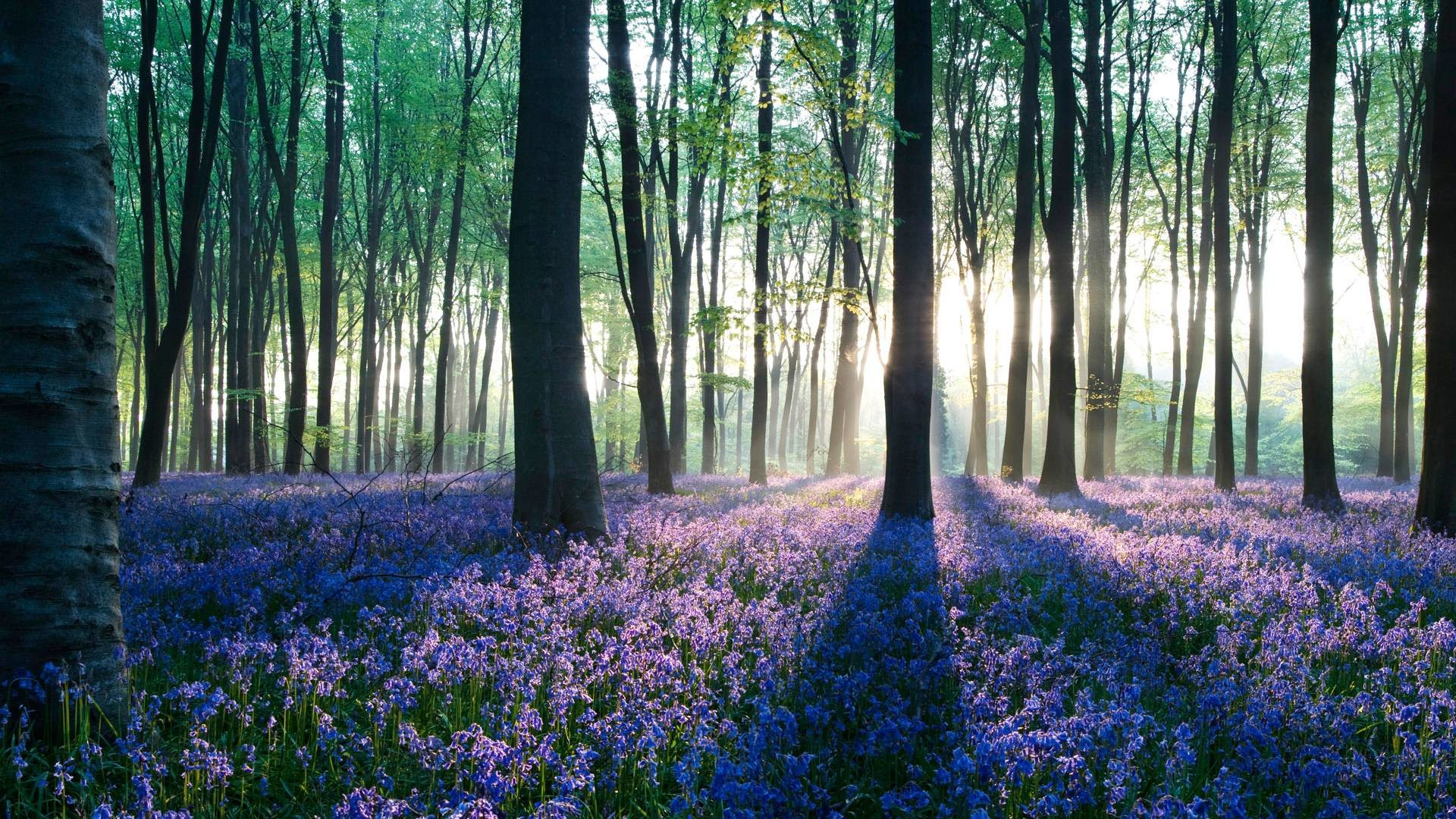 Wallpaperwiki Pictures HD Forest Download PIC WPC003908