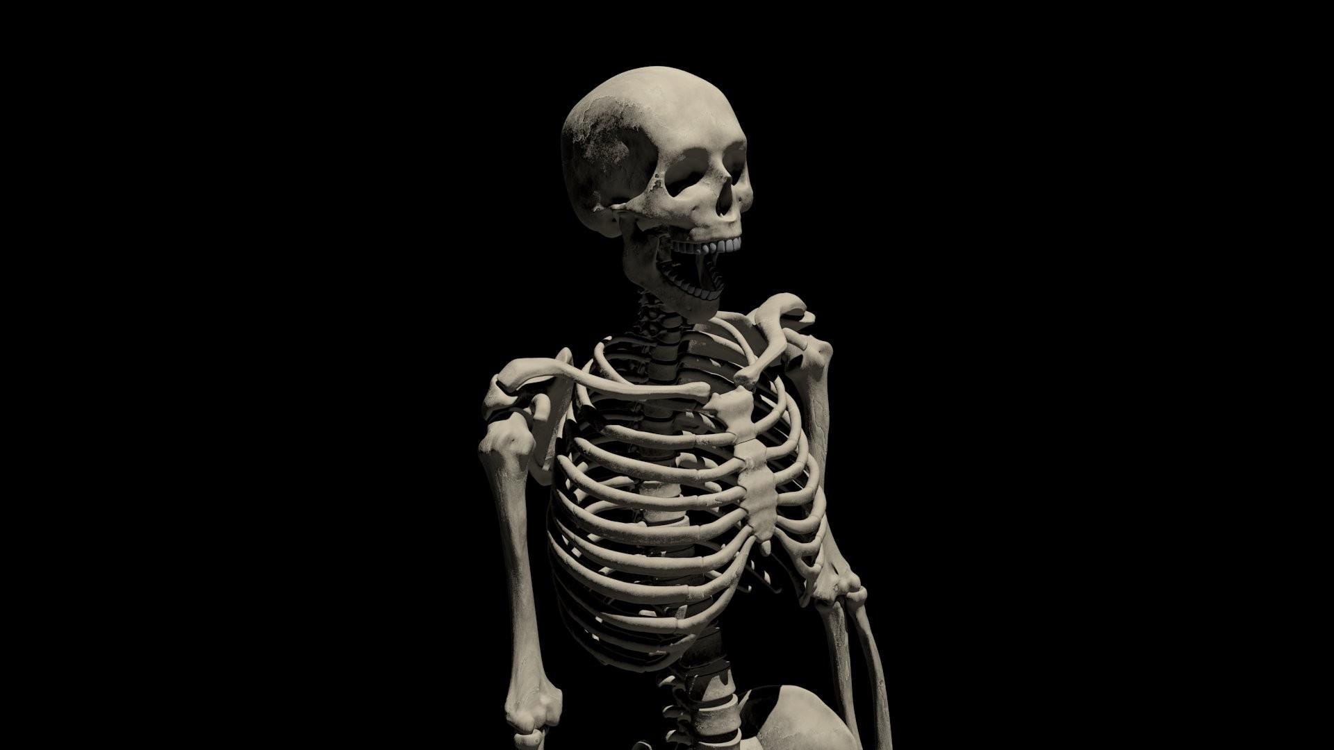 Skeleton ...