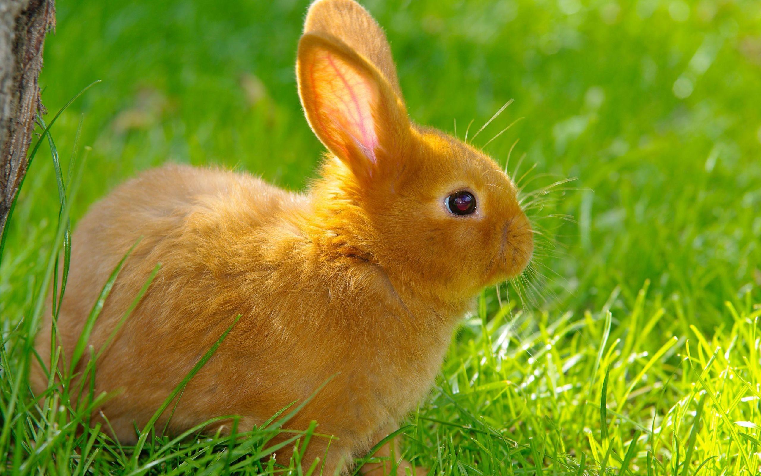 кролик трава  № 1964029 без смс