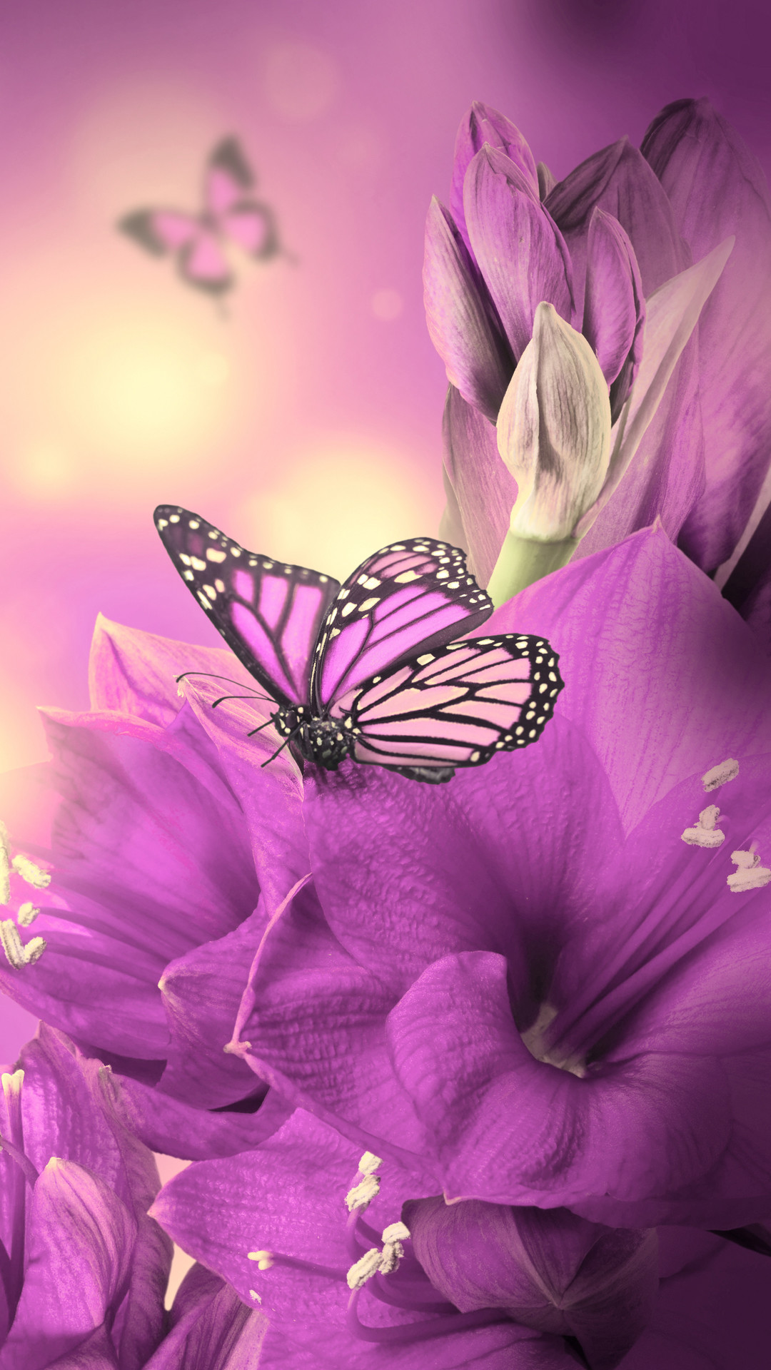 Cool Butterfly Backgrounds