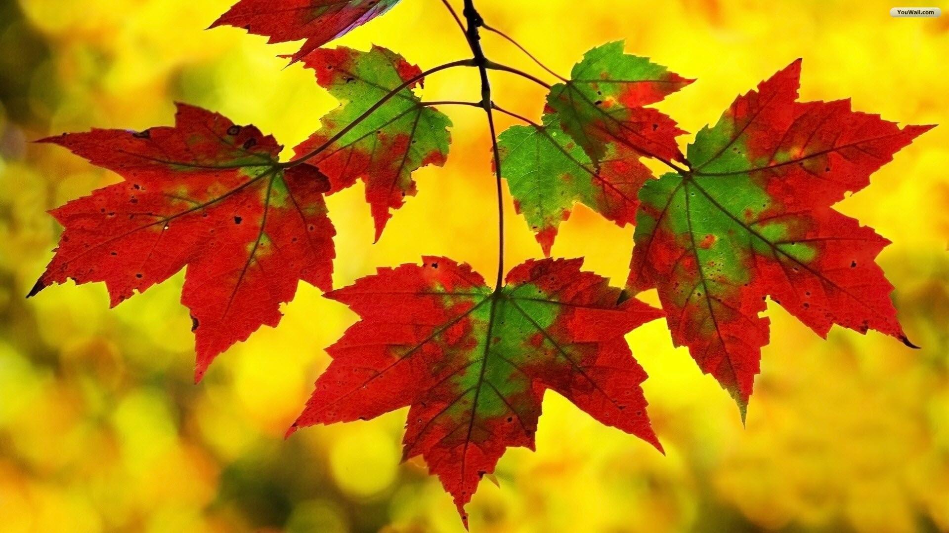 Wallpaper Autumn Leaves ·â'