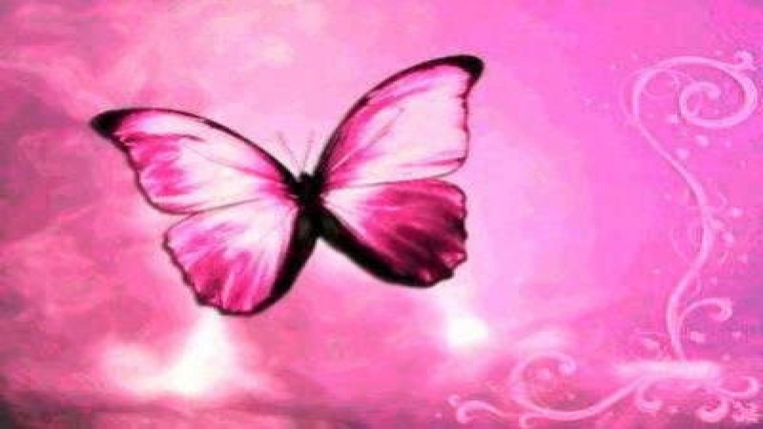 hd cute pink butterfly - photo #11