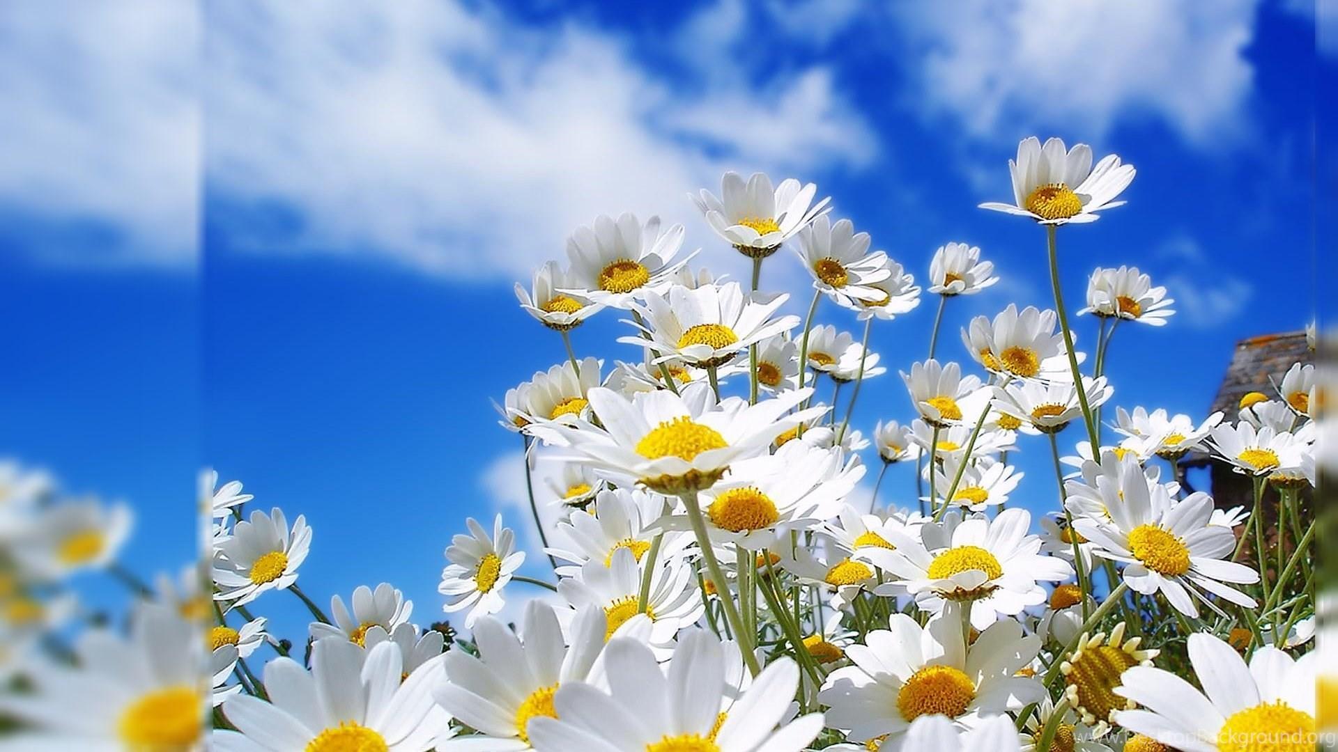 Flower Desktop Backgrounds 1