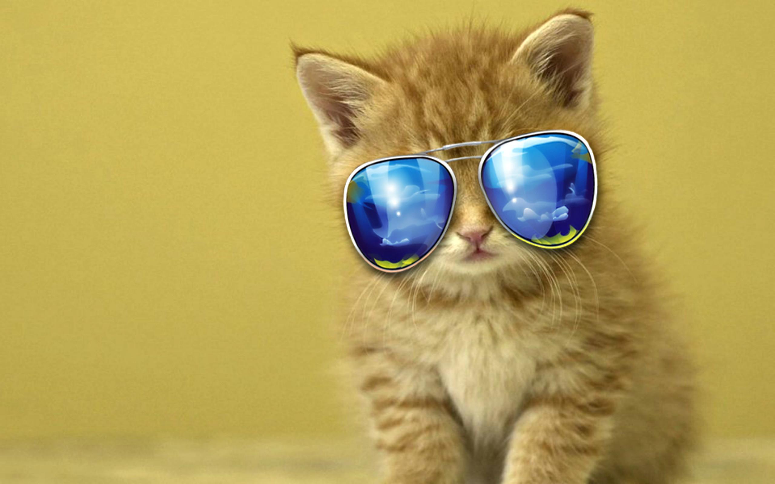 Cute Cat Backgrounds ·① WallpaperTag