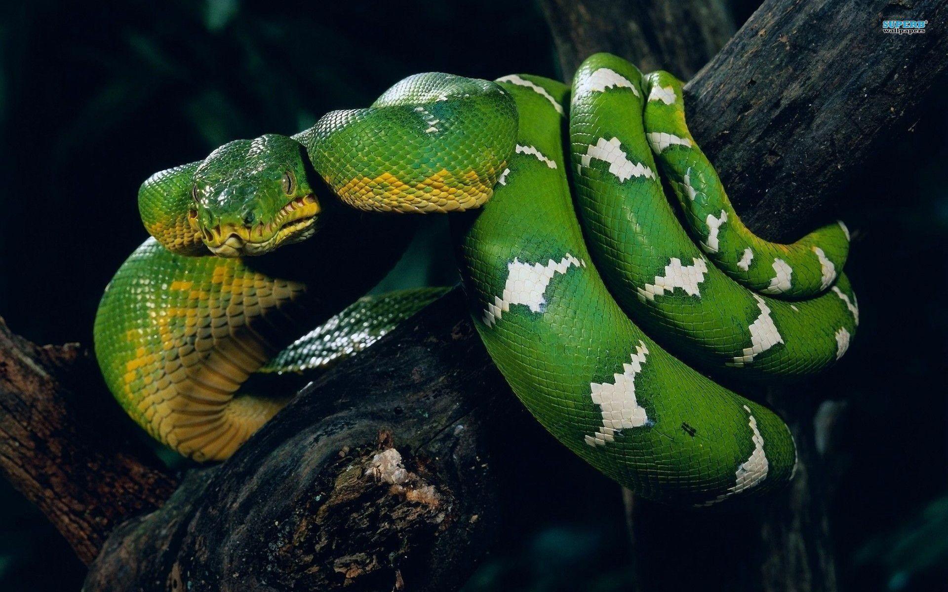 snake - HD1920×1080