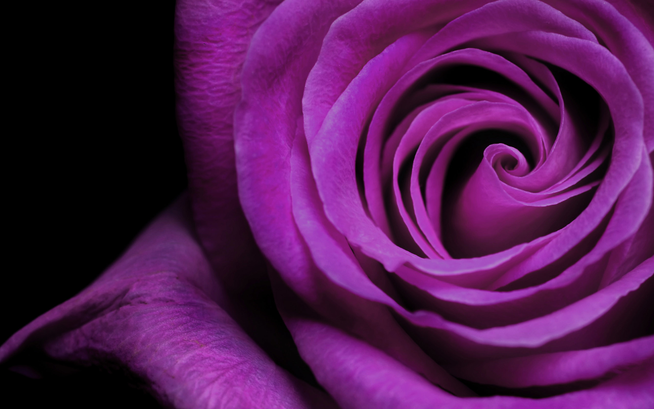 2560x1600 Most Beautiful Purple Flowers Images Pictures