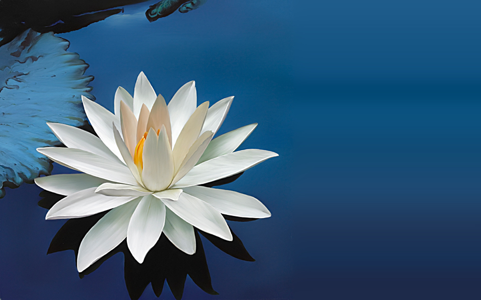 Lotus Flower Wallpaper ① Wallpapertag