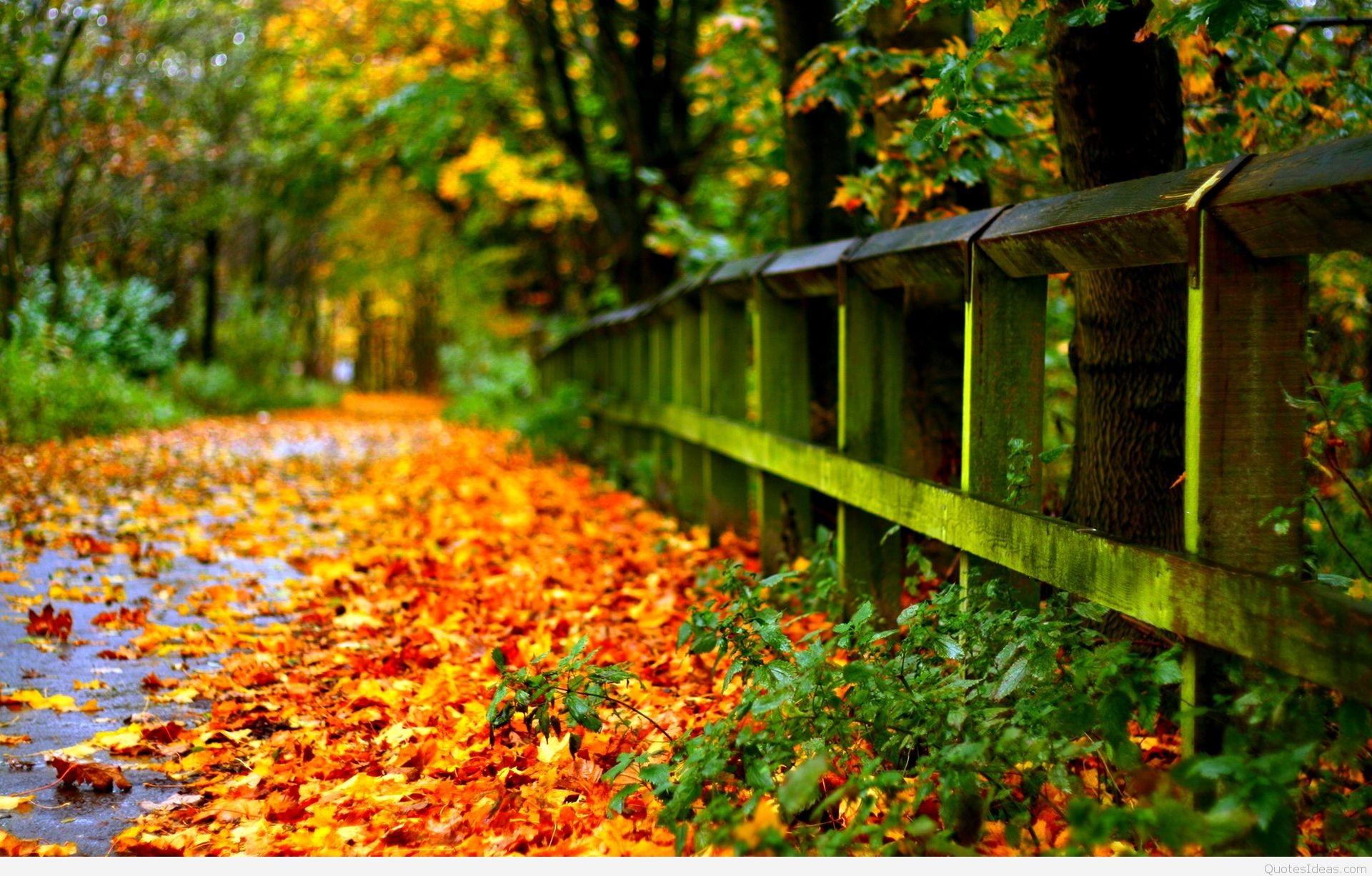 Autumn Wallpaper Widescreen ·① Download Free Amazing High