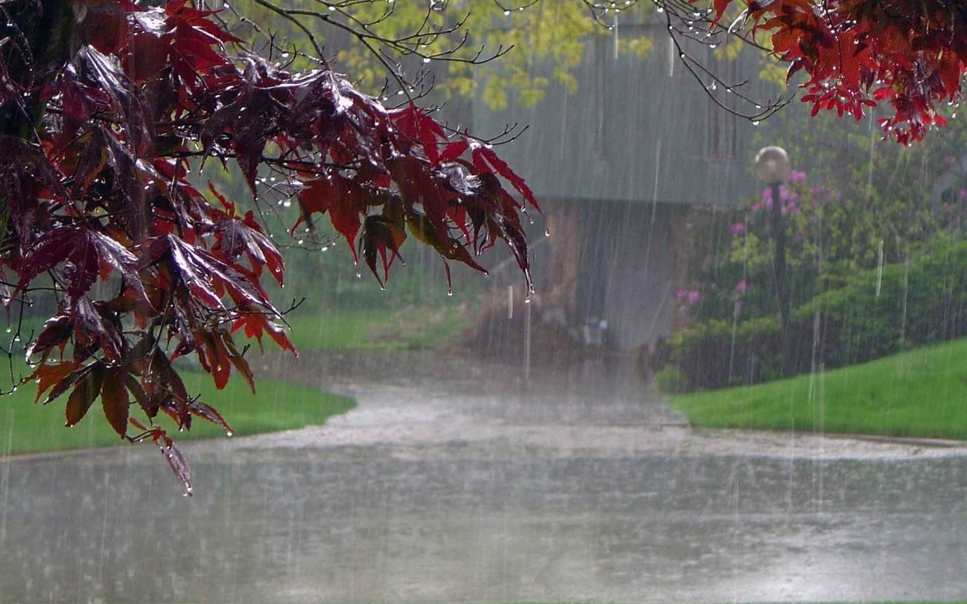 Nature rain wallpaper for Rain wallpaper hd