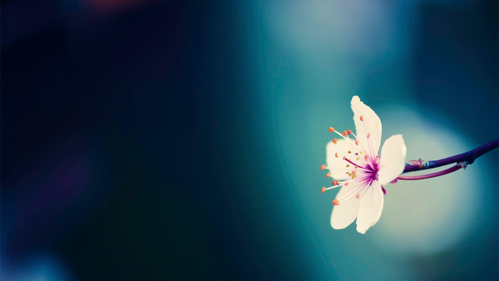 Spring Flower Wallpaper Backgrounds Wallpapertag
