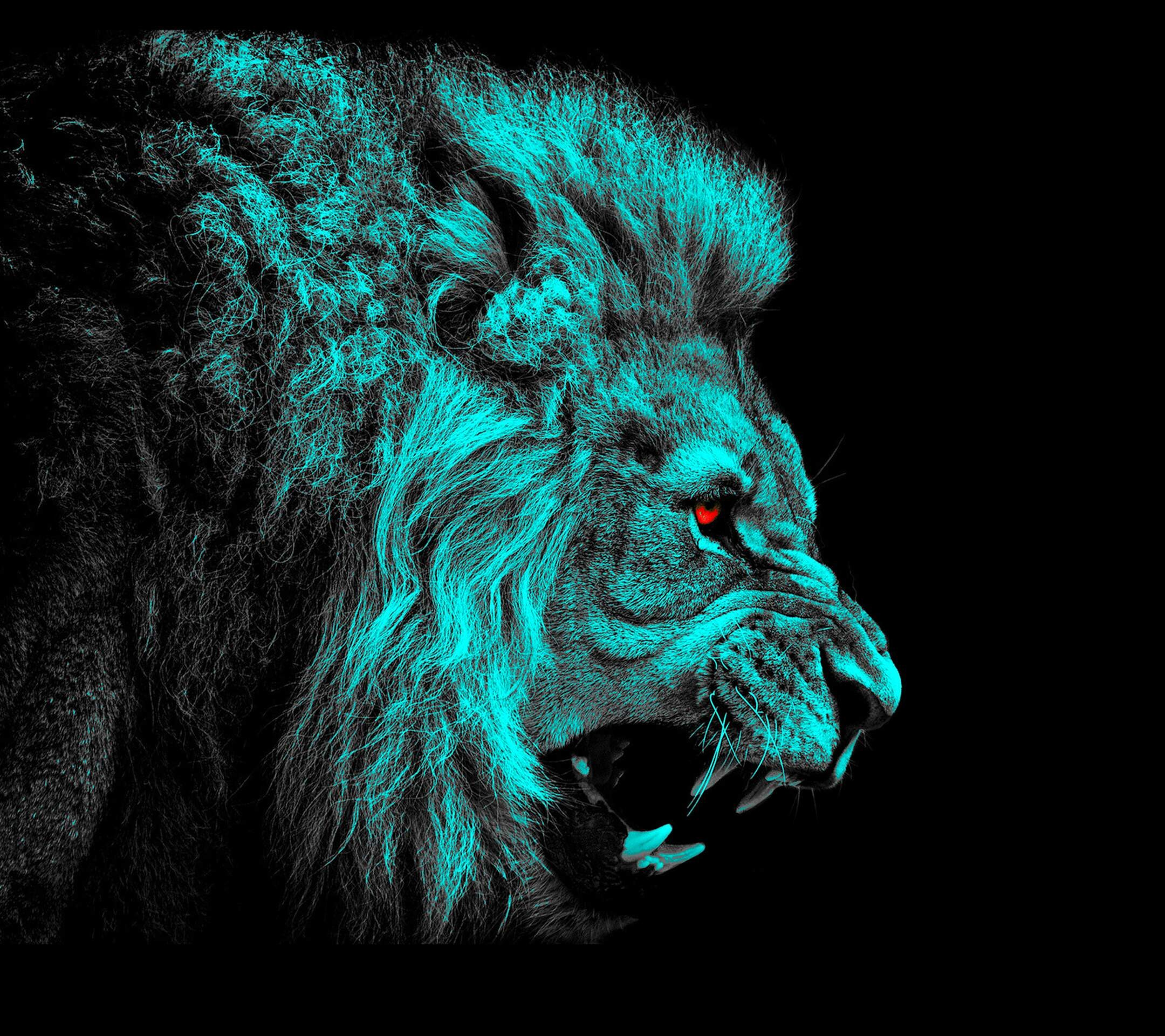 Lion wallpaper ·① Download free beautiful full HD ...