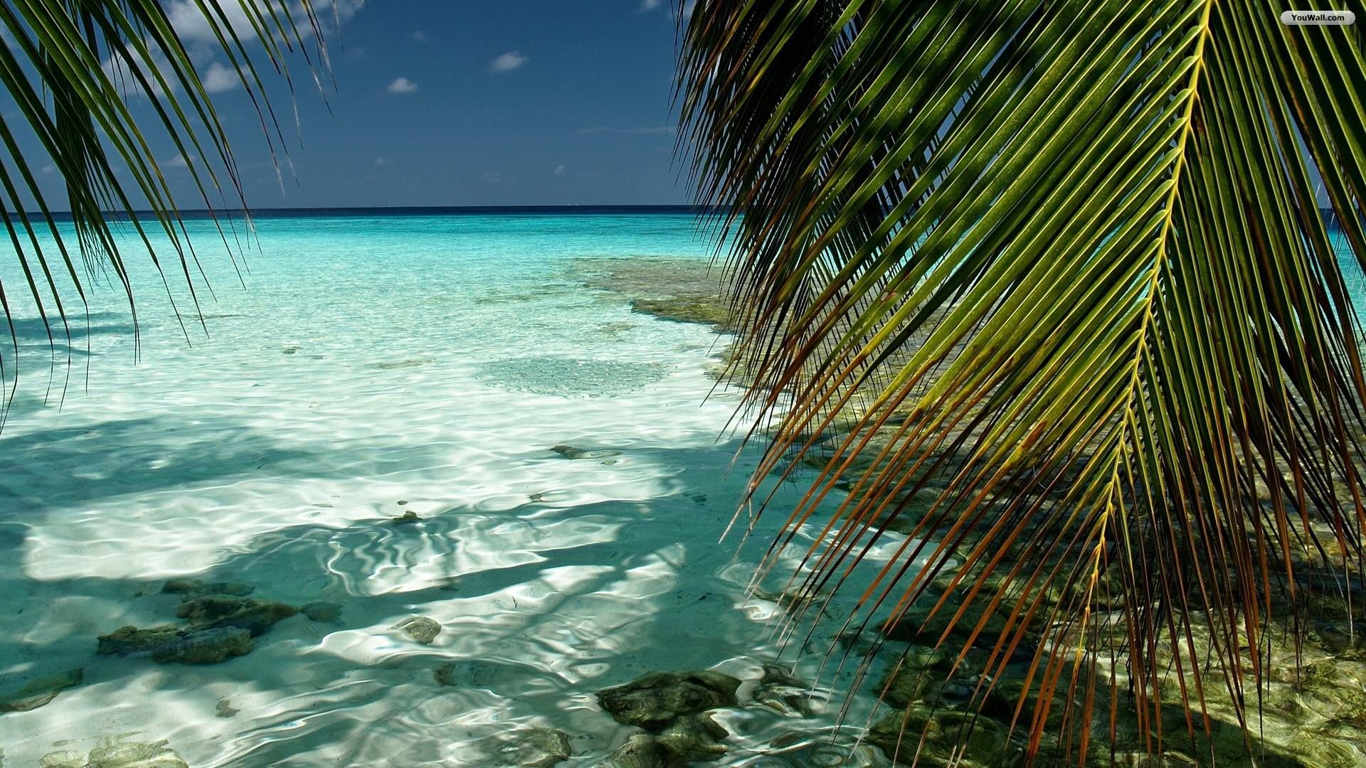 Tropical Wallpaper: Tropical Desktop Backgrounds ·① WallpaperTag