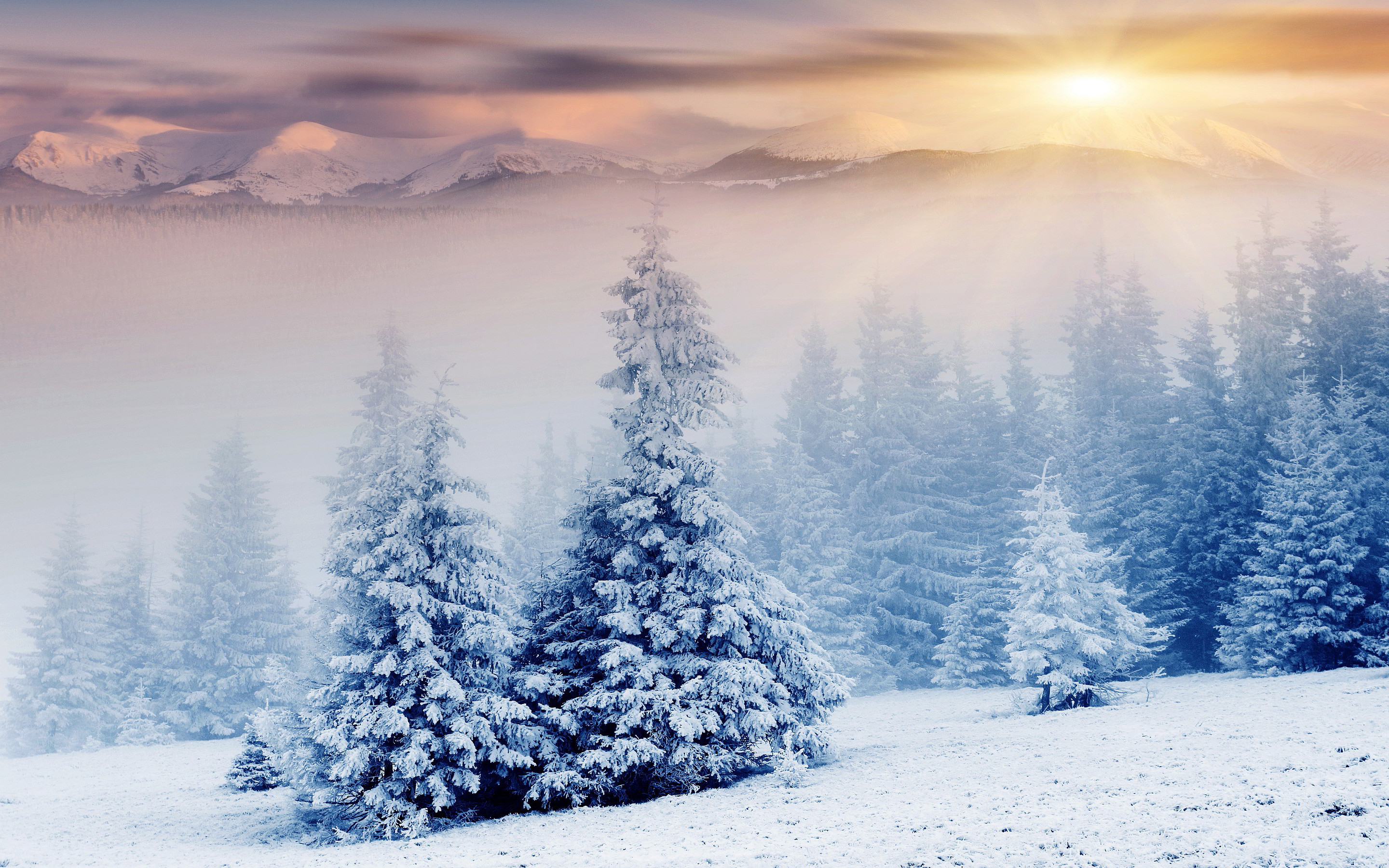Beautiful Golden Road Forest Sunlight Winter Background Snow Wallpaper Illuminated Trees Through Snowy Surrounding Wallpapers