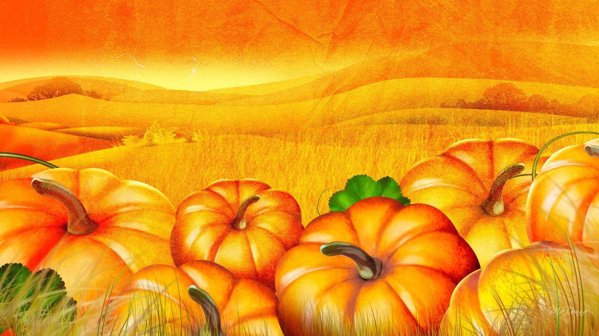 Pumpkin background ·① download free full hd backgrounds