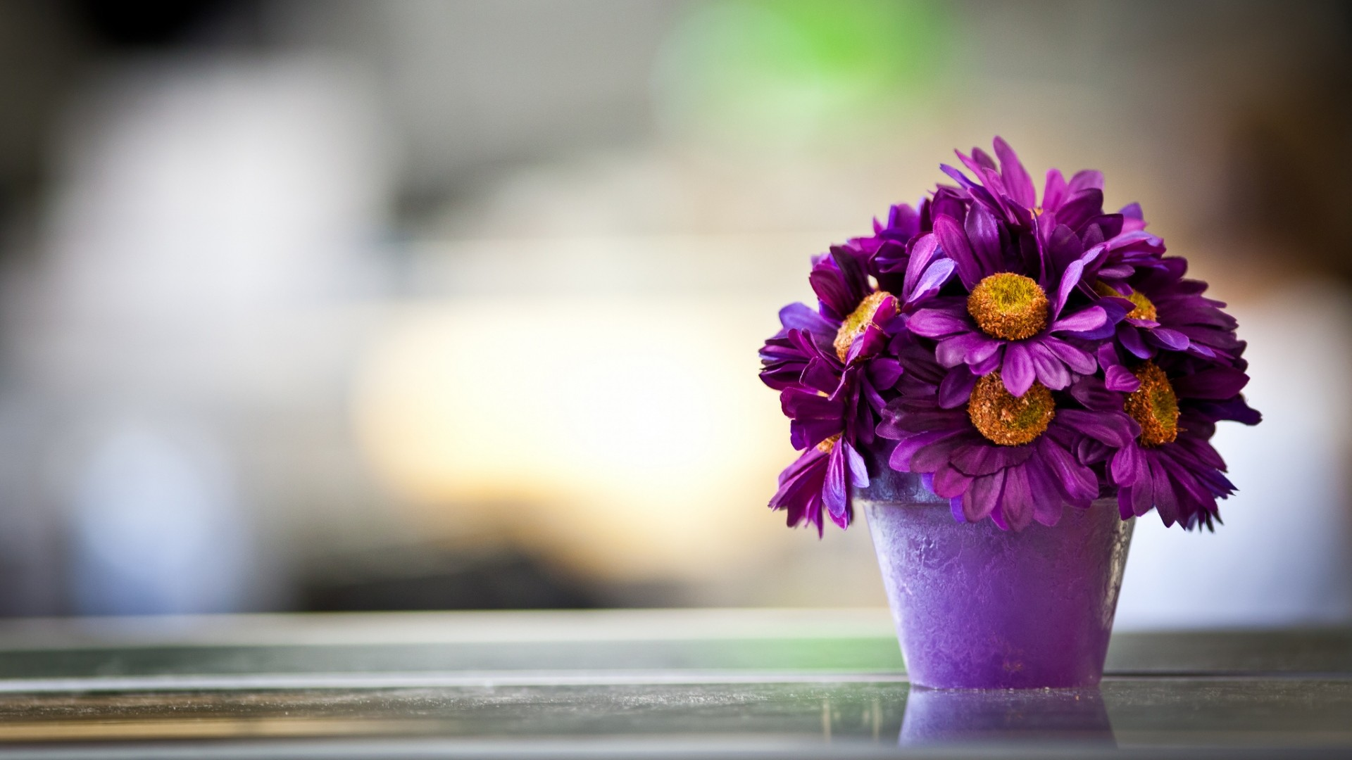 Hd flower wallpaper 1920x1080 preview wallpaper flower pot purple petals 1920x1080 mightylinksfo