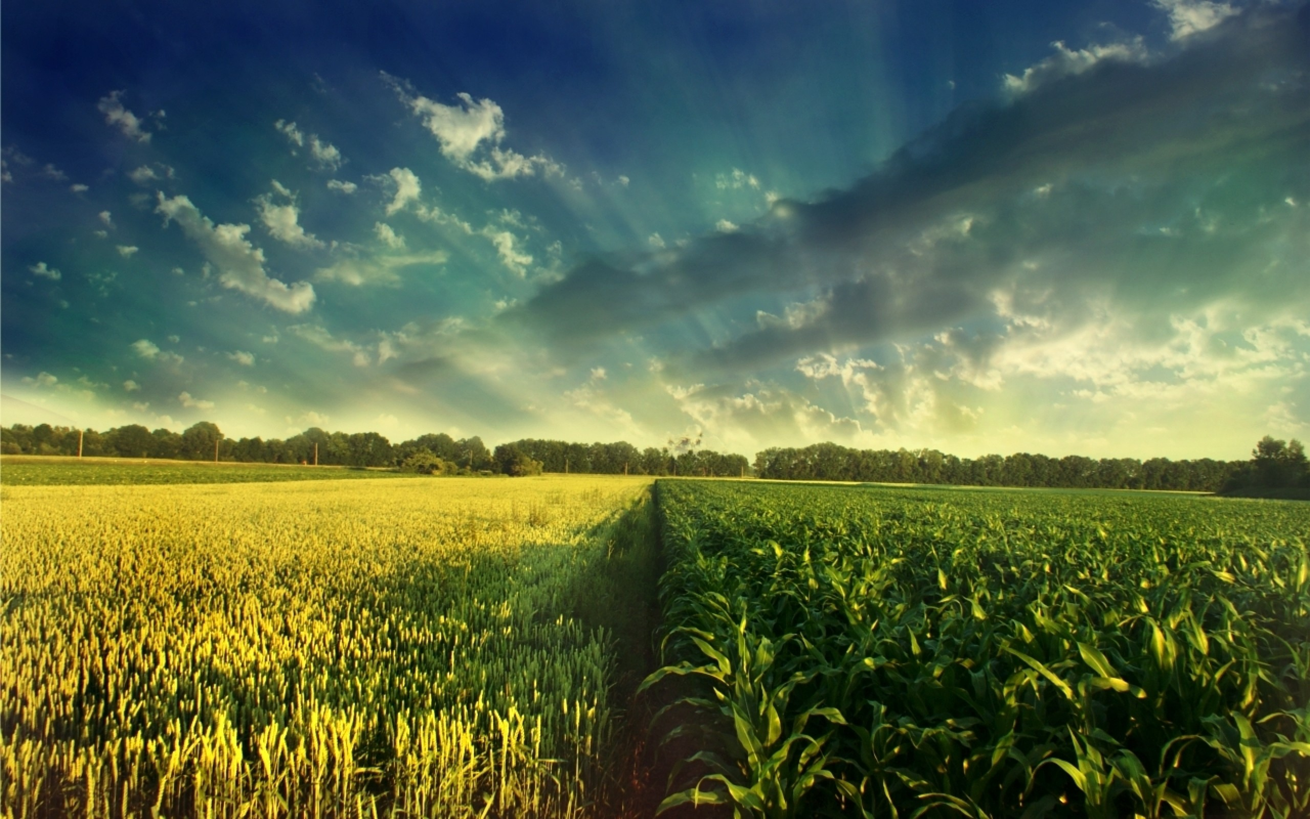 Field background ·① Download free High Resolution ...
