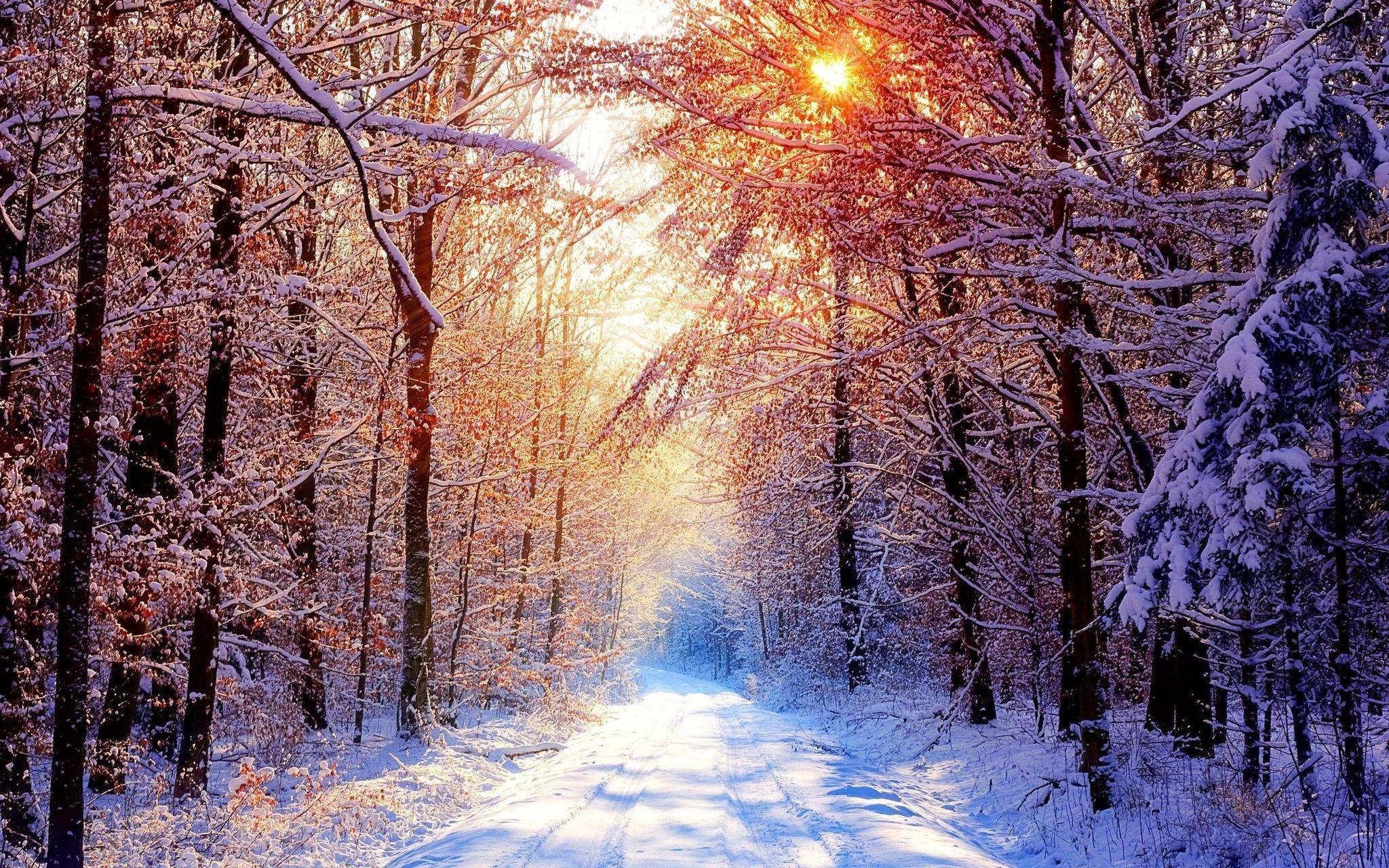 Winter Scene Backgrounds 1