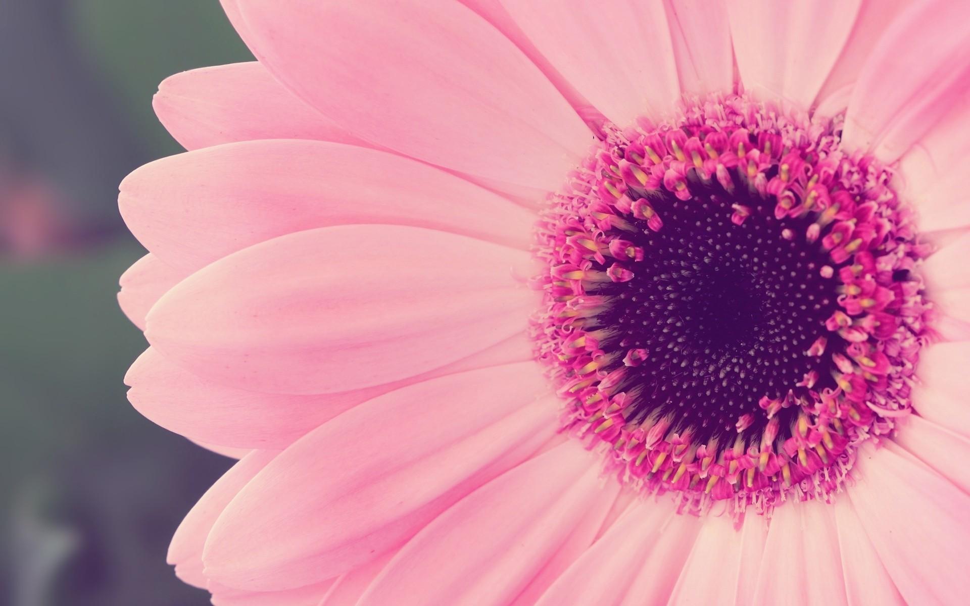 Pink flower desktop wallpaper 1920x1200 great pink flower wallpaper download search mightylinksfo