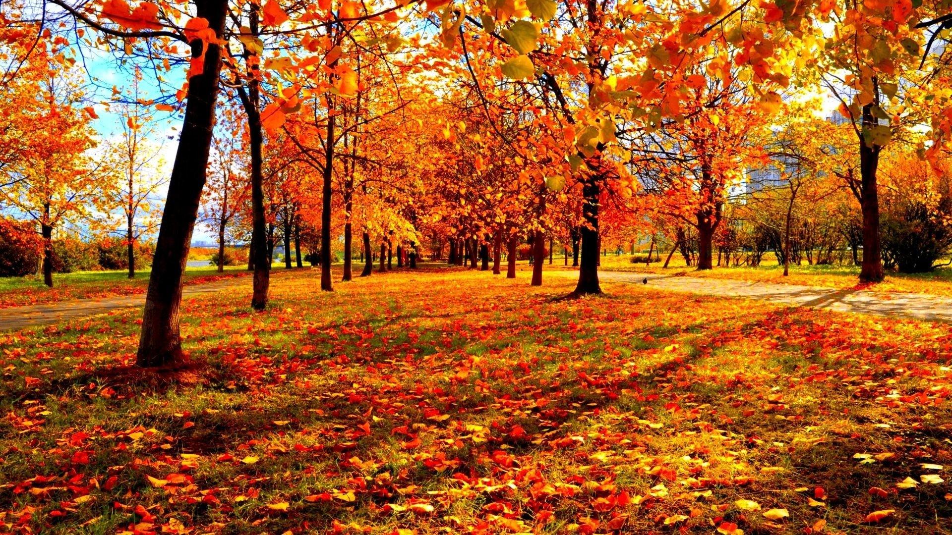 autumn season - photo #7