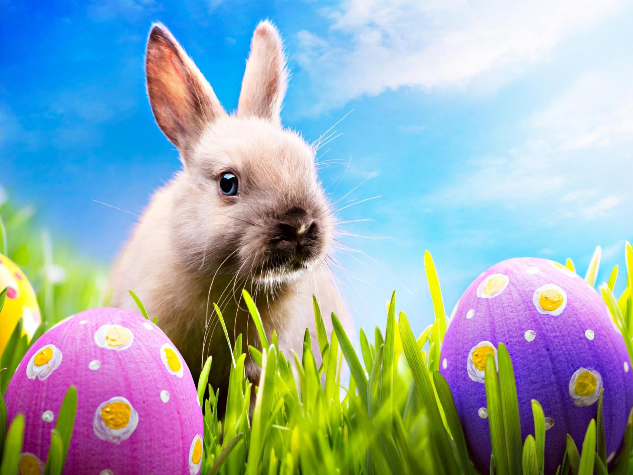 Easter bunny desktop wallpaper wallpapertag - Easter bunny wallpaper ...